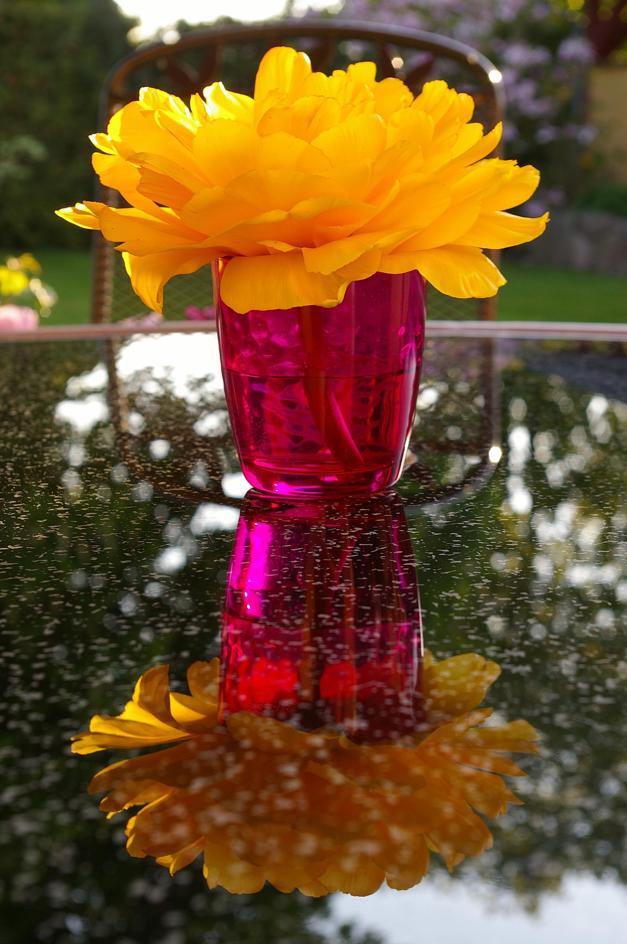 Free Images : nature, blossom, petal, floral, tulip, vase, red ...