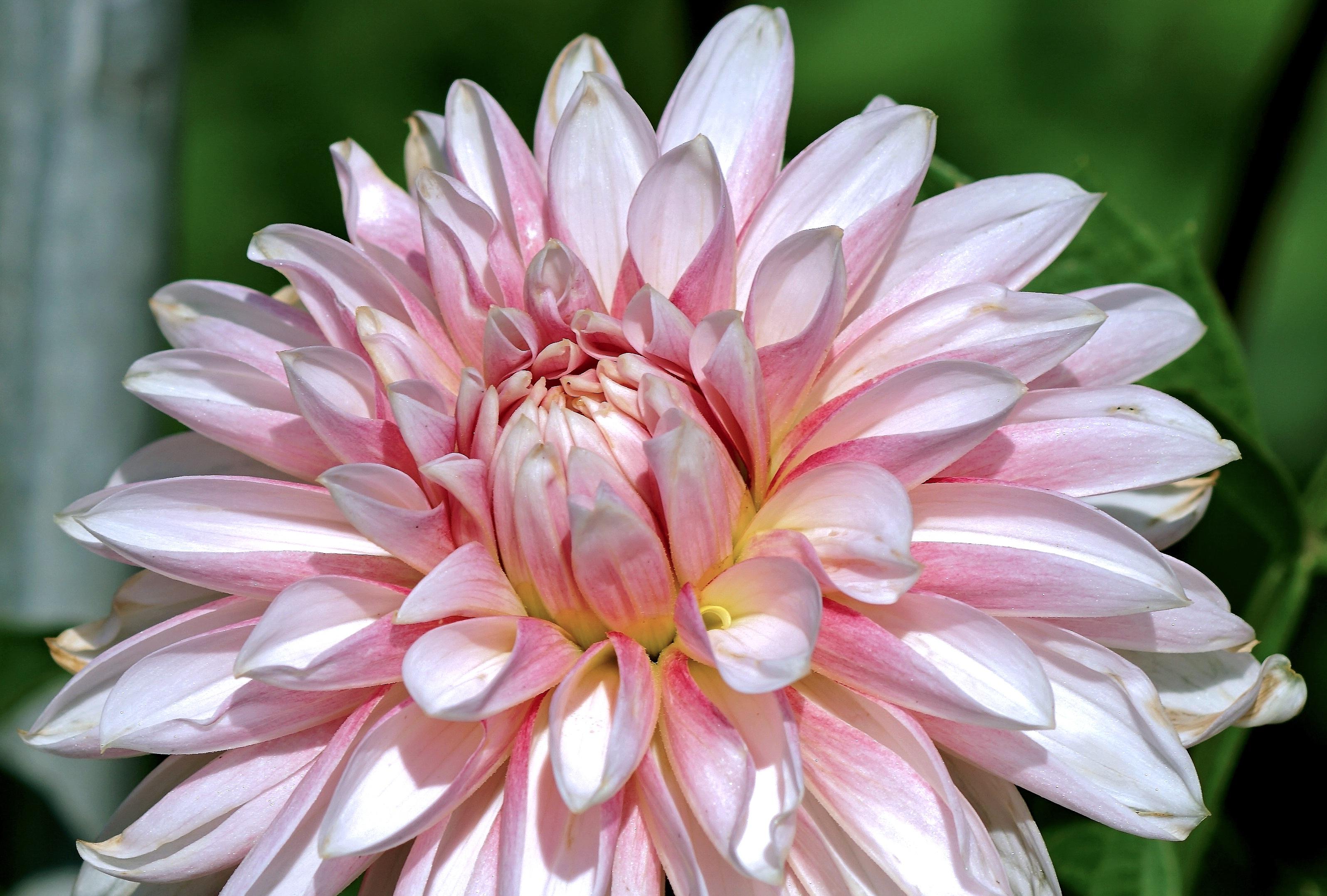 Darmowe Zdjęcia Natura Kwitnąć Kwiat Płatek Różowy Flora