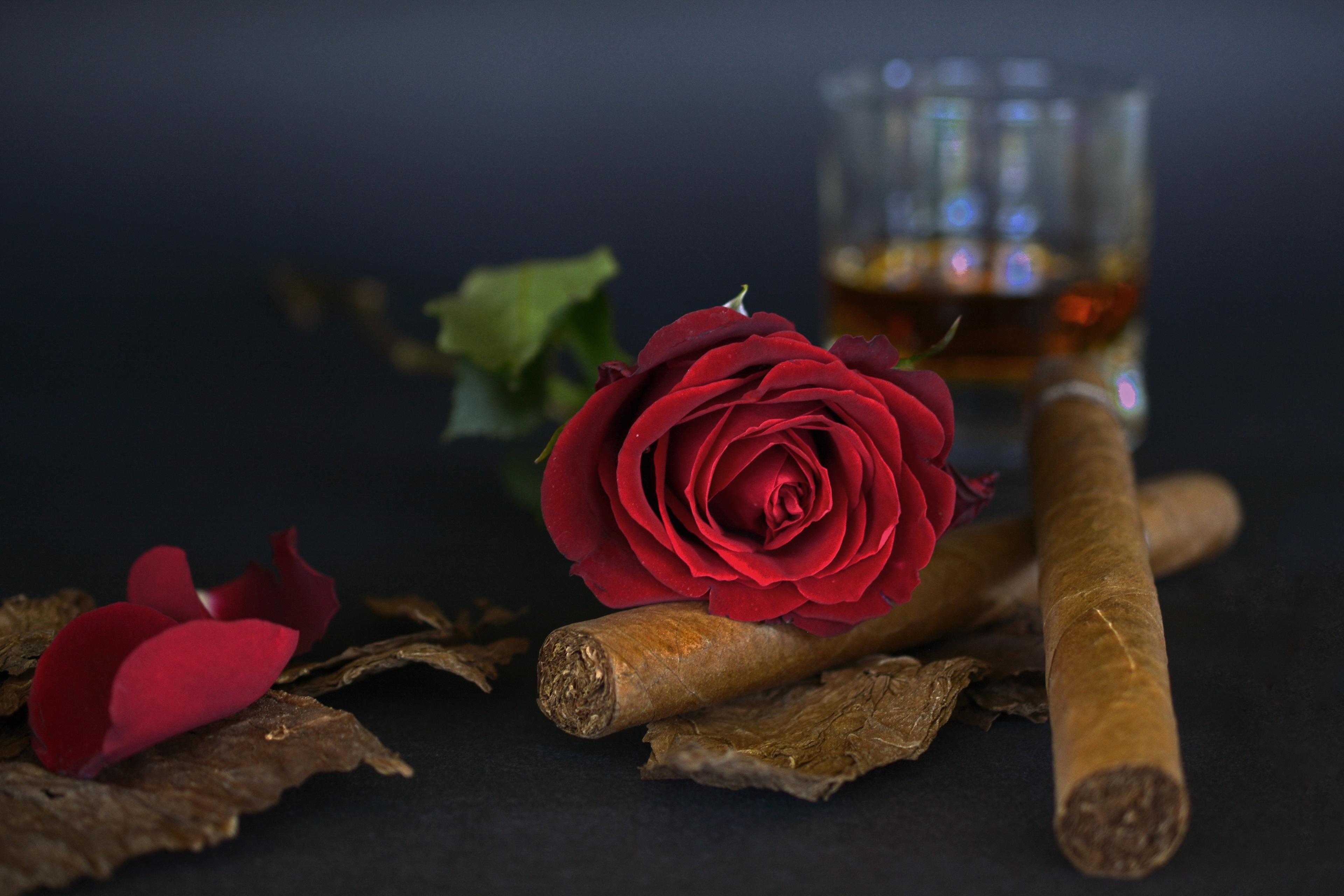 napít se nadržený kouření