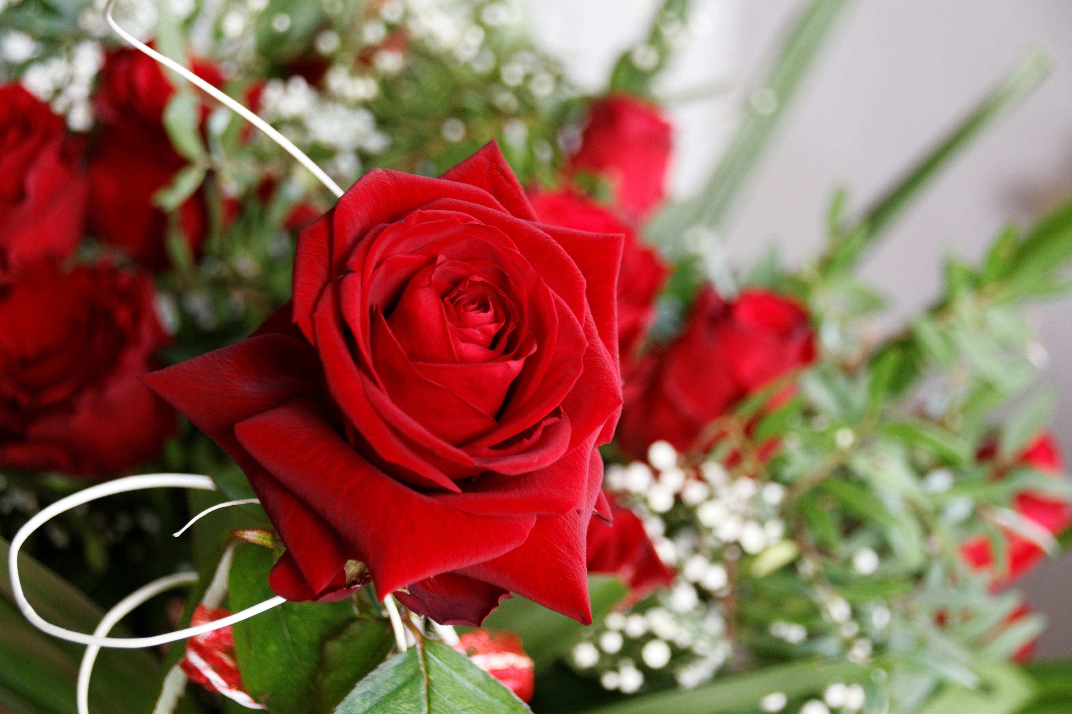 Открытки букеты из роз или просто одиночные розы - 3D галерея 23
