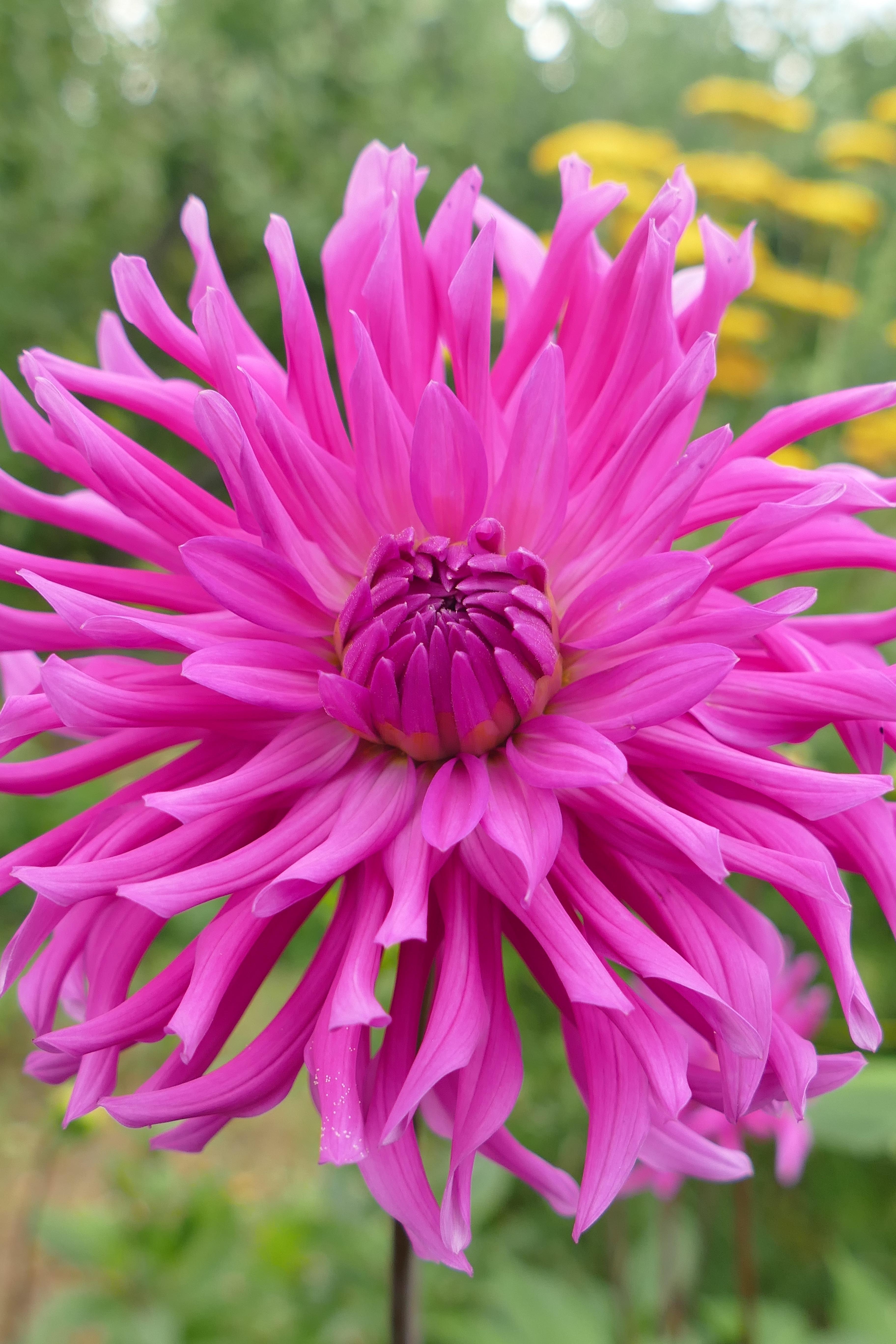 Free Images Nature Blossom Petal Bloom Botany Pink Flora