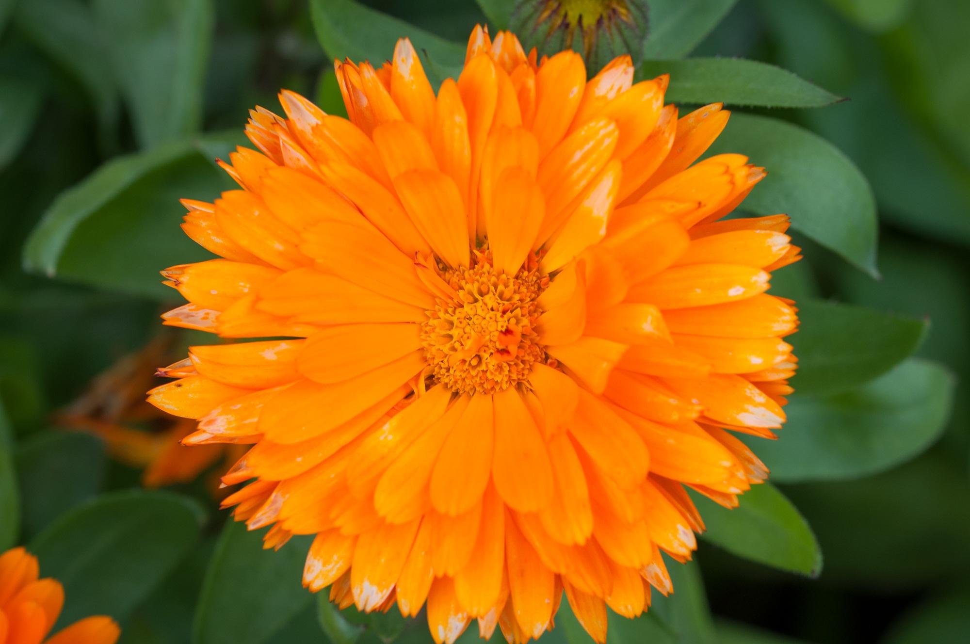 Free Images Nature Petal Bloom Herb Botany Yellow Close
