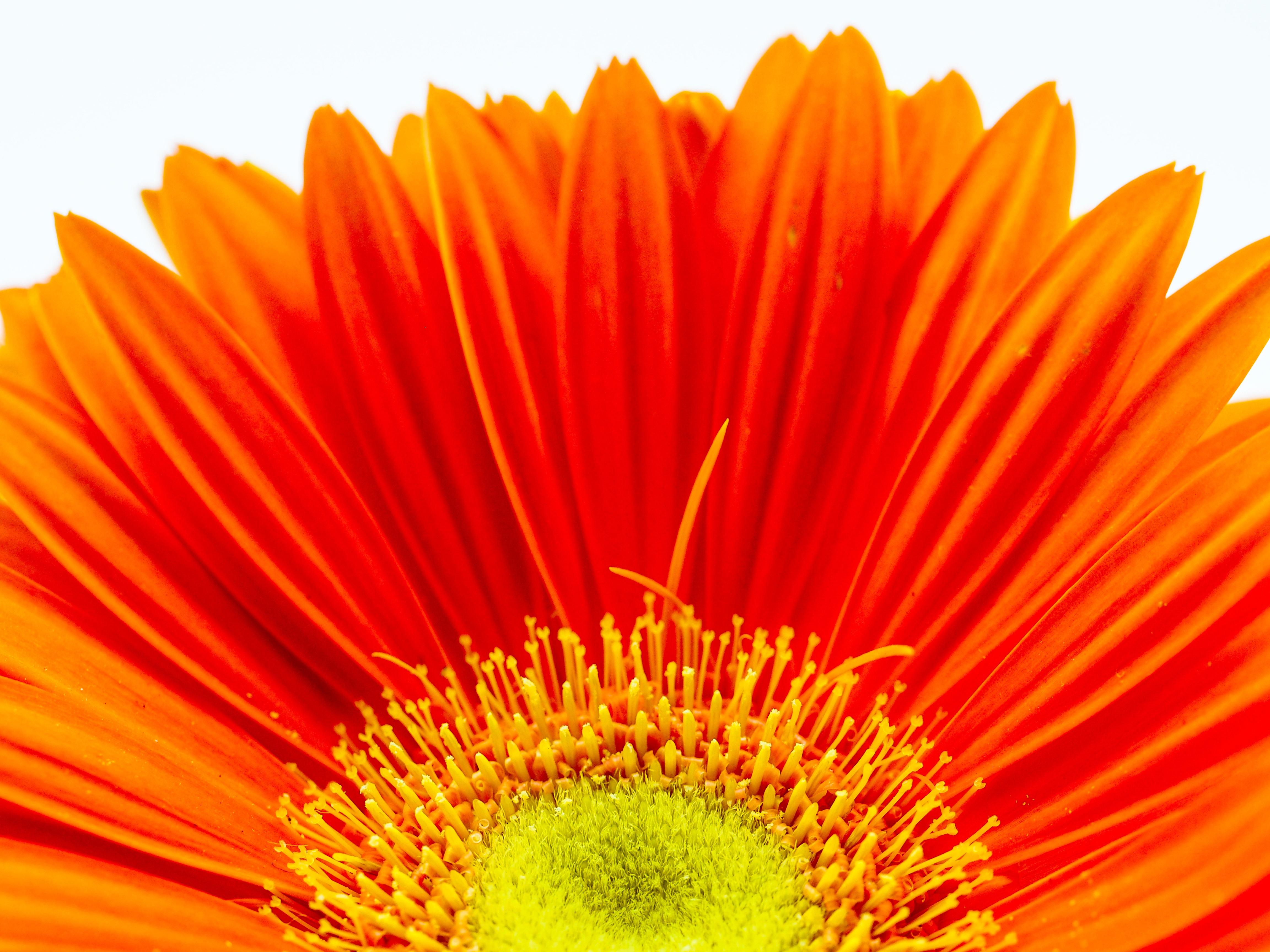 оранжевый цветочек картинка удобно для