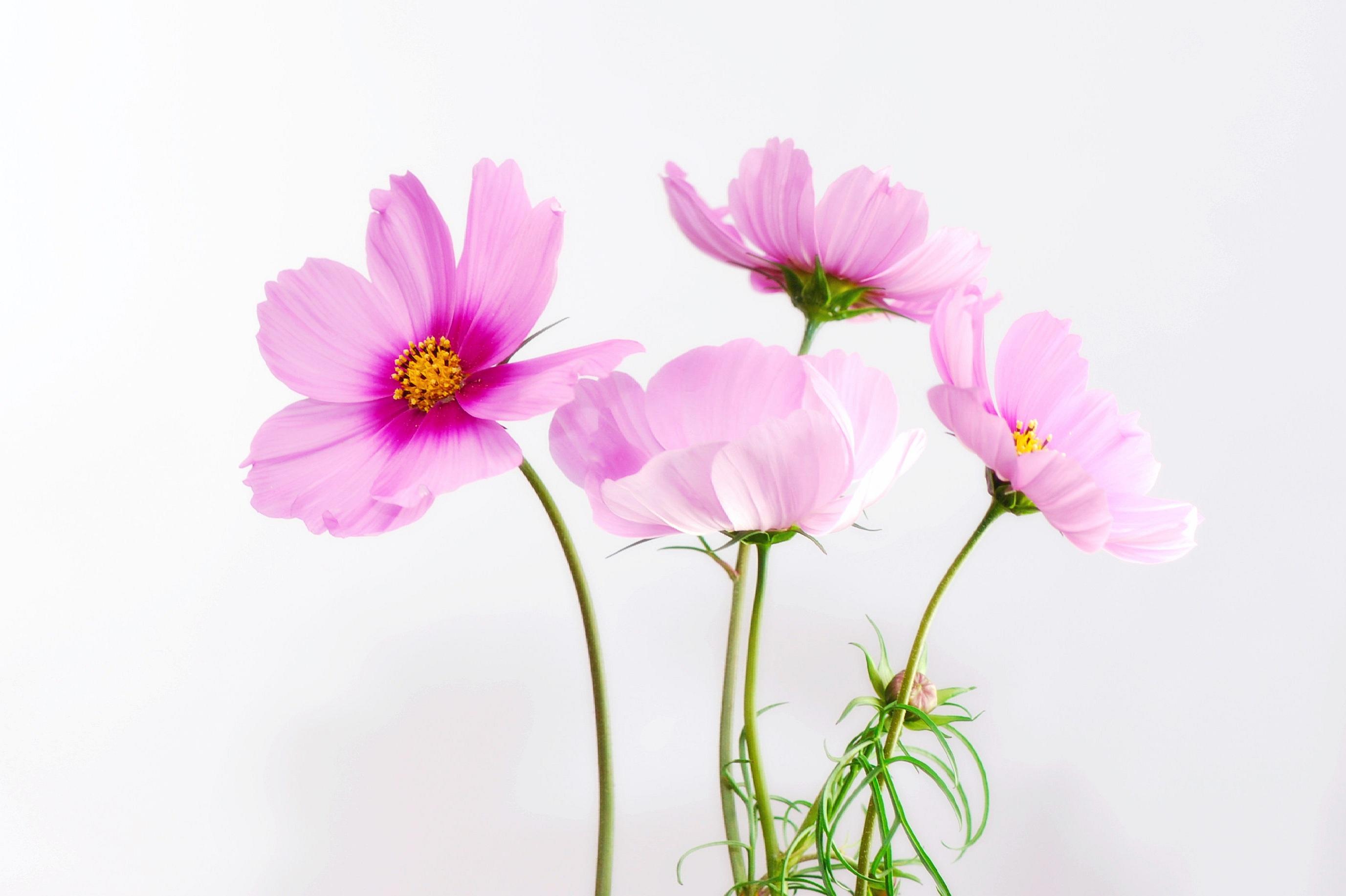 Free Images Nature Blossom Petal Bloom Pollen Spring Pink