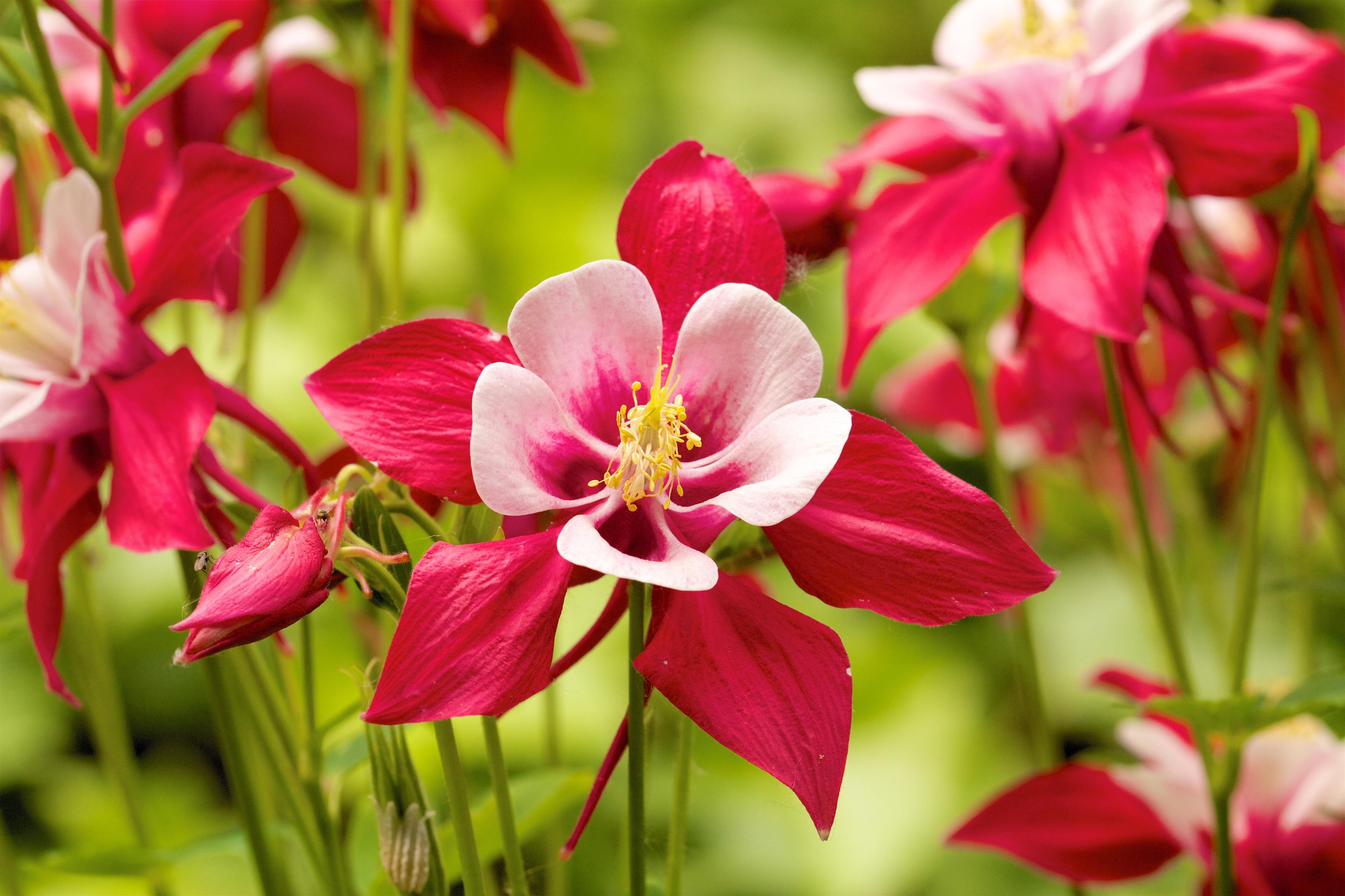 корочки, дикие цветы фото и названия по алфавиту организациях