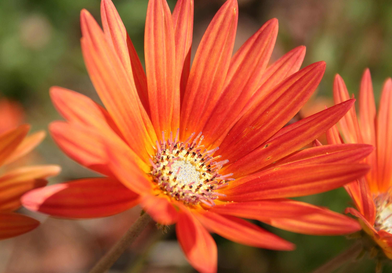 Free Images Nature Blossom Petal Bloom Romantic Botany