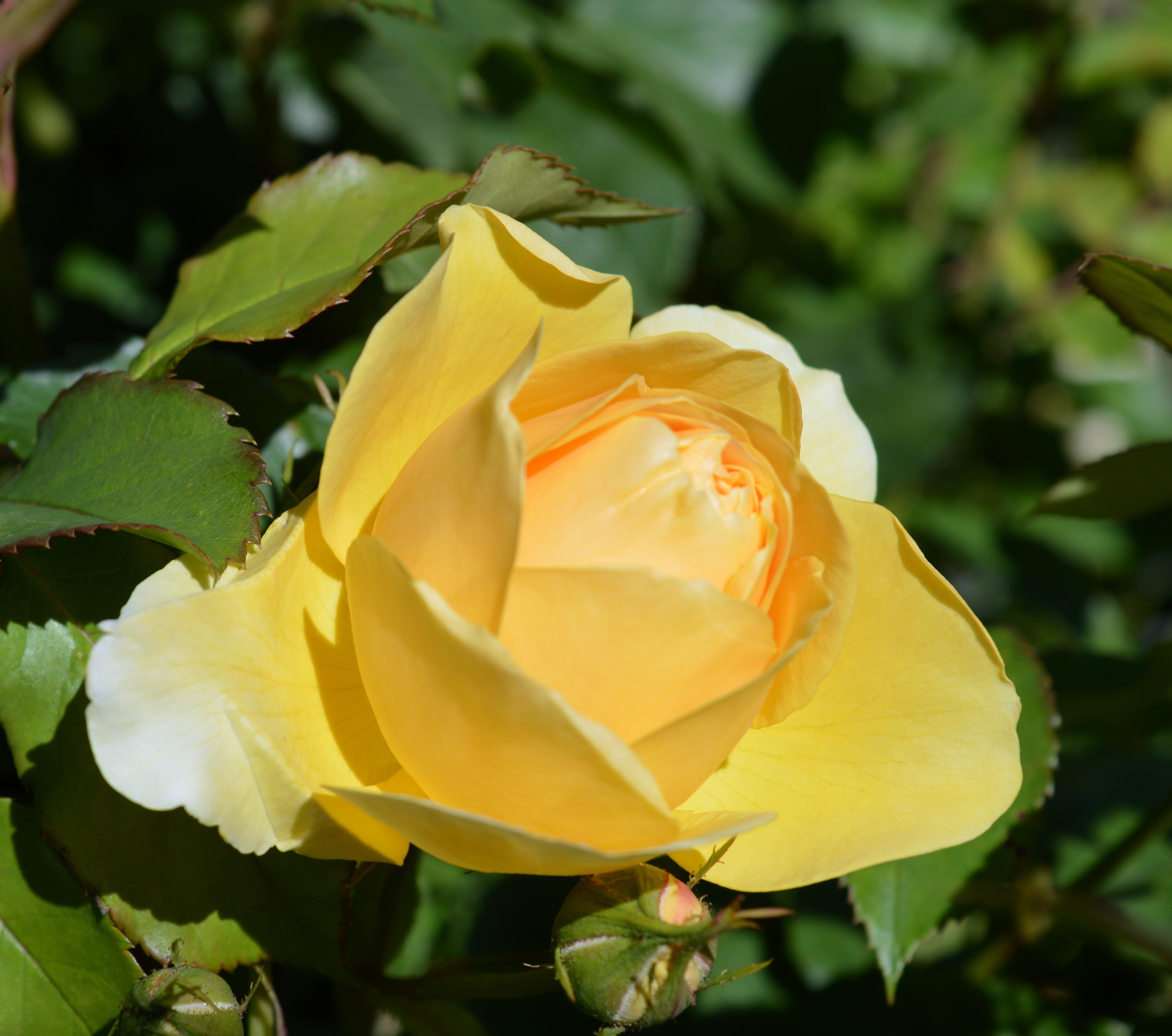Free Images Nature Blossom Petal Romantic Botany Close Flora