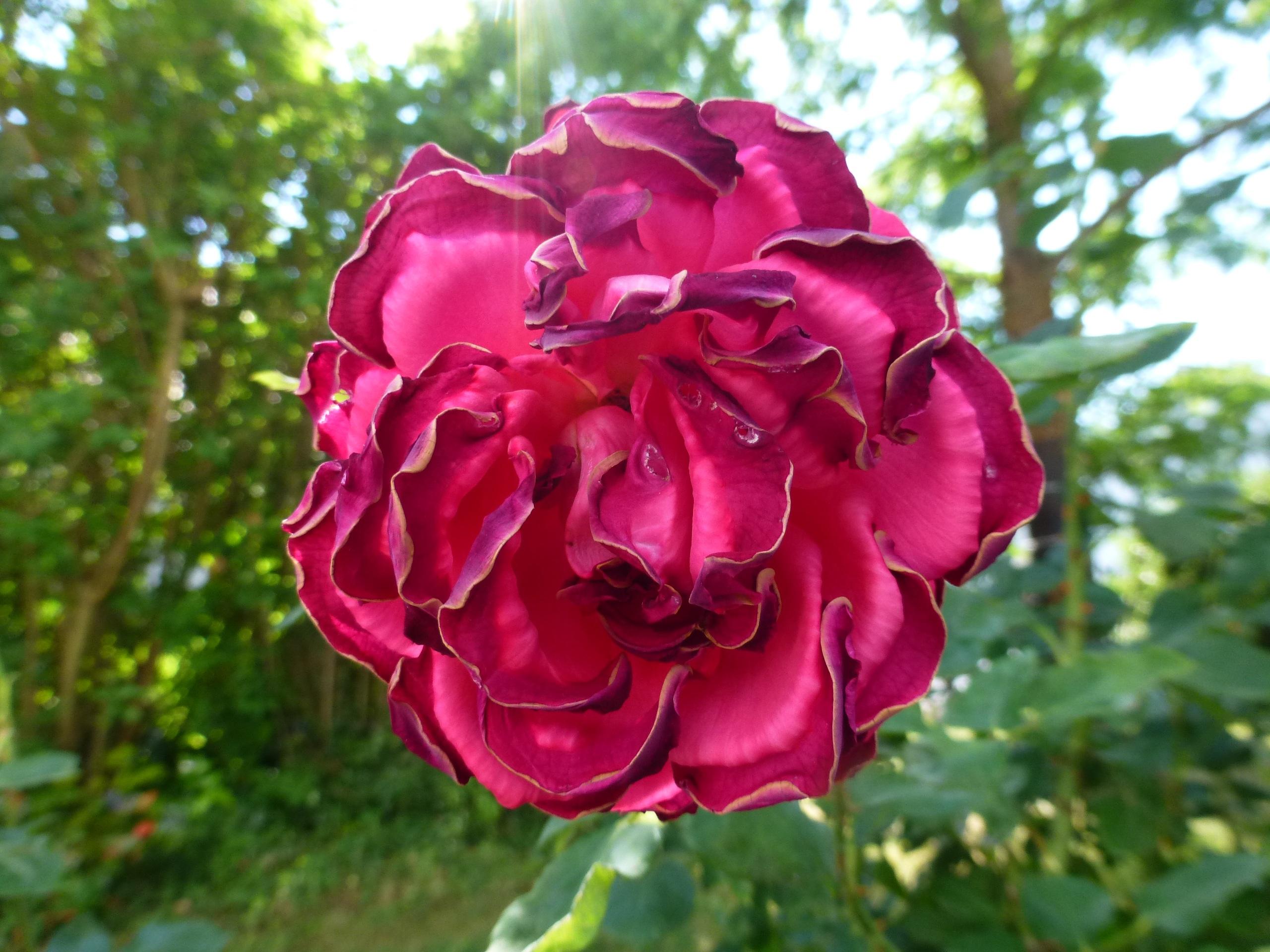 images gratuites la nature p tale floraison printemps botanique champignon fermer flore. Black Bedroom Furniture Sets. Home Design Ideas