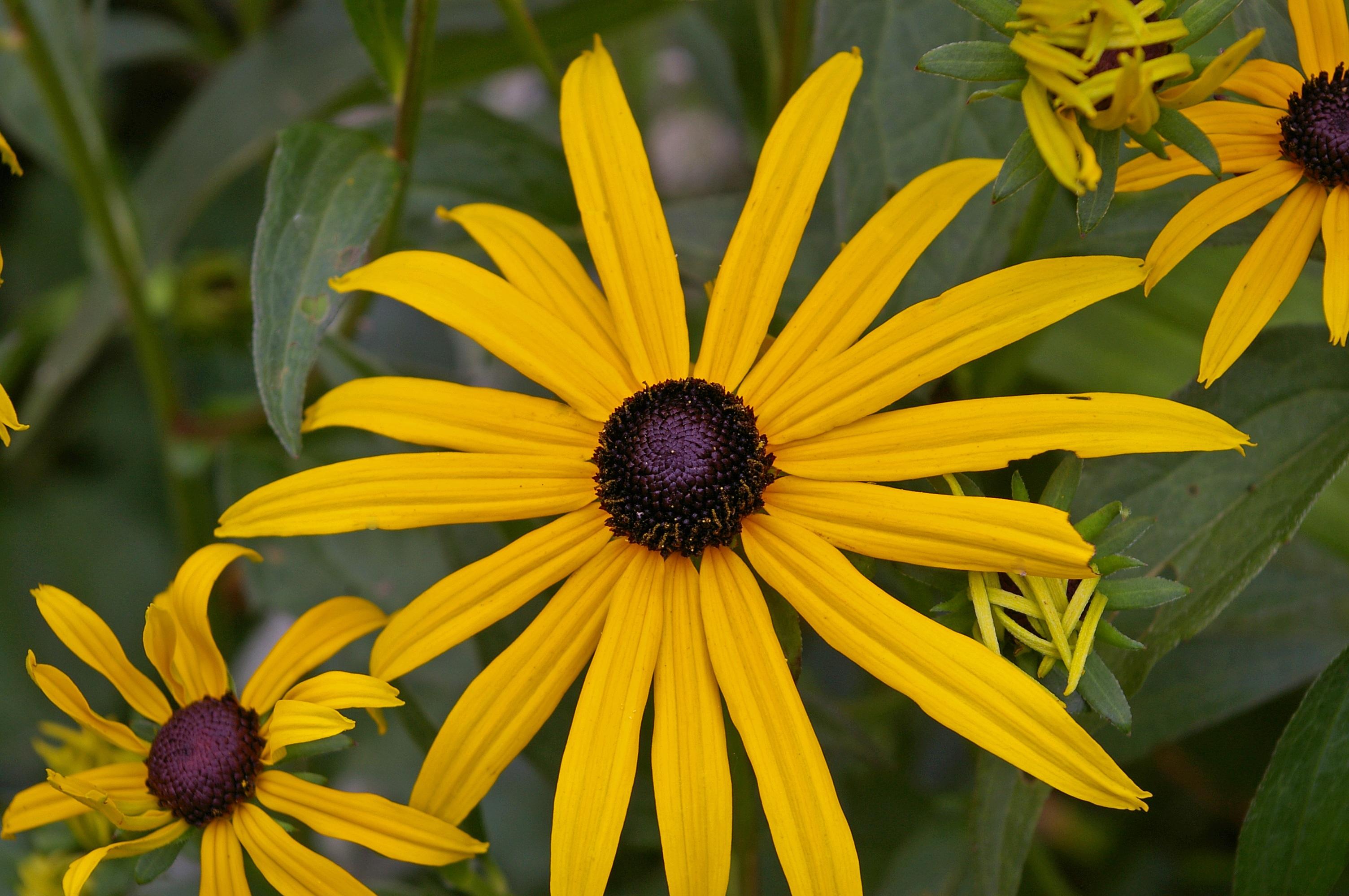 Free Images Nature Blossom Petal Bloom Botany Colorful Flora