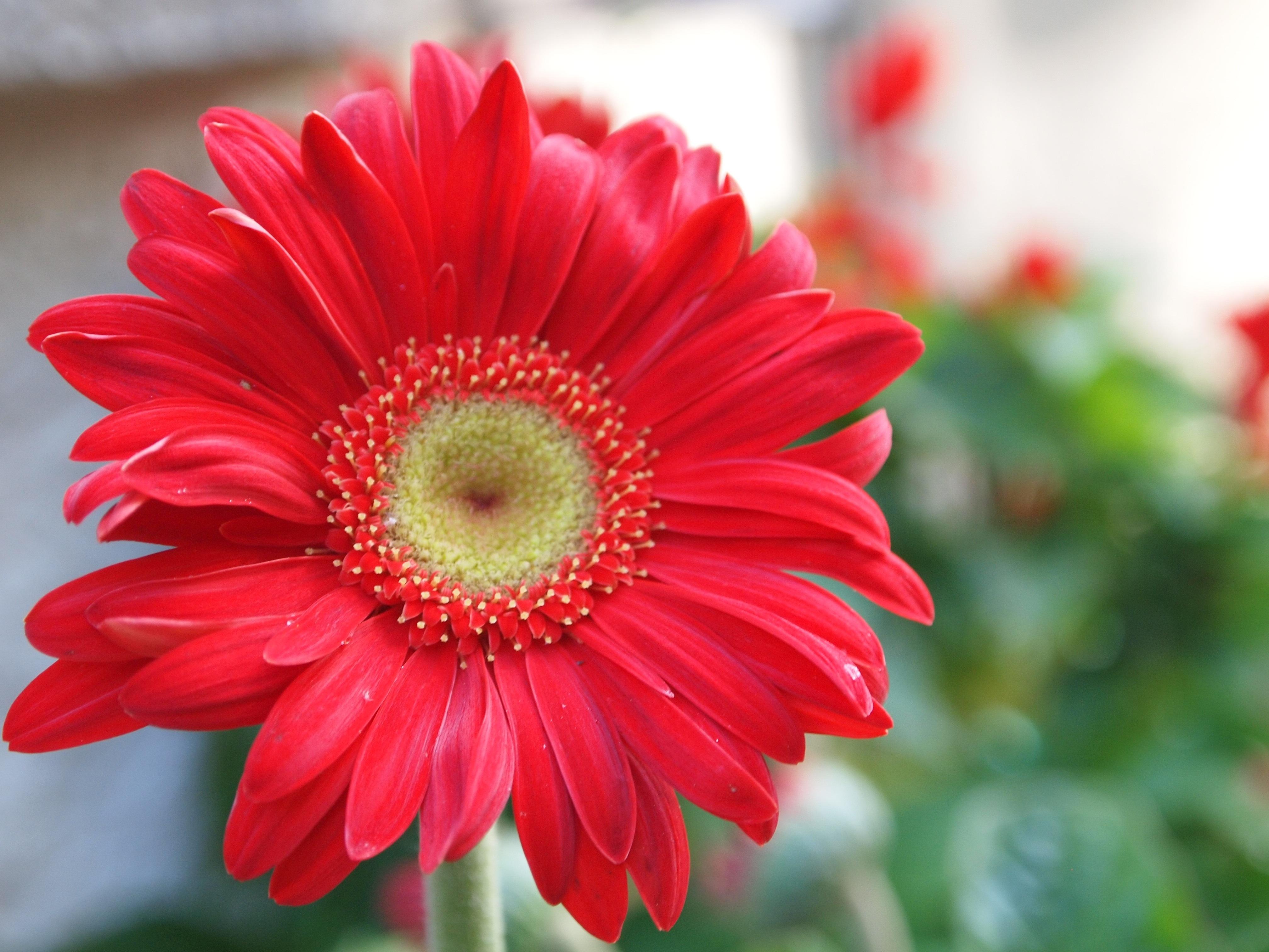 Free Images : nature, blossom, flower, petal, bloom, summer, floral ...
