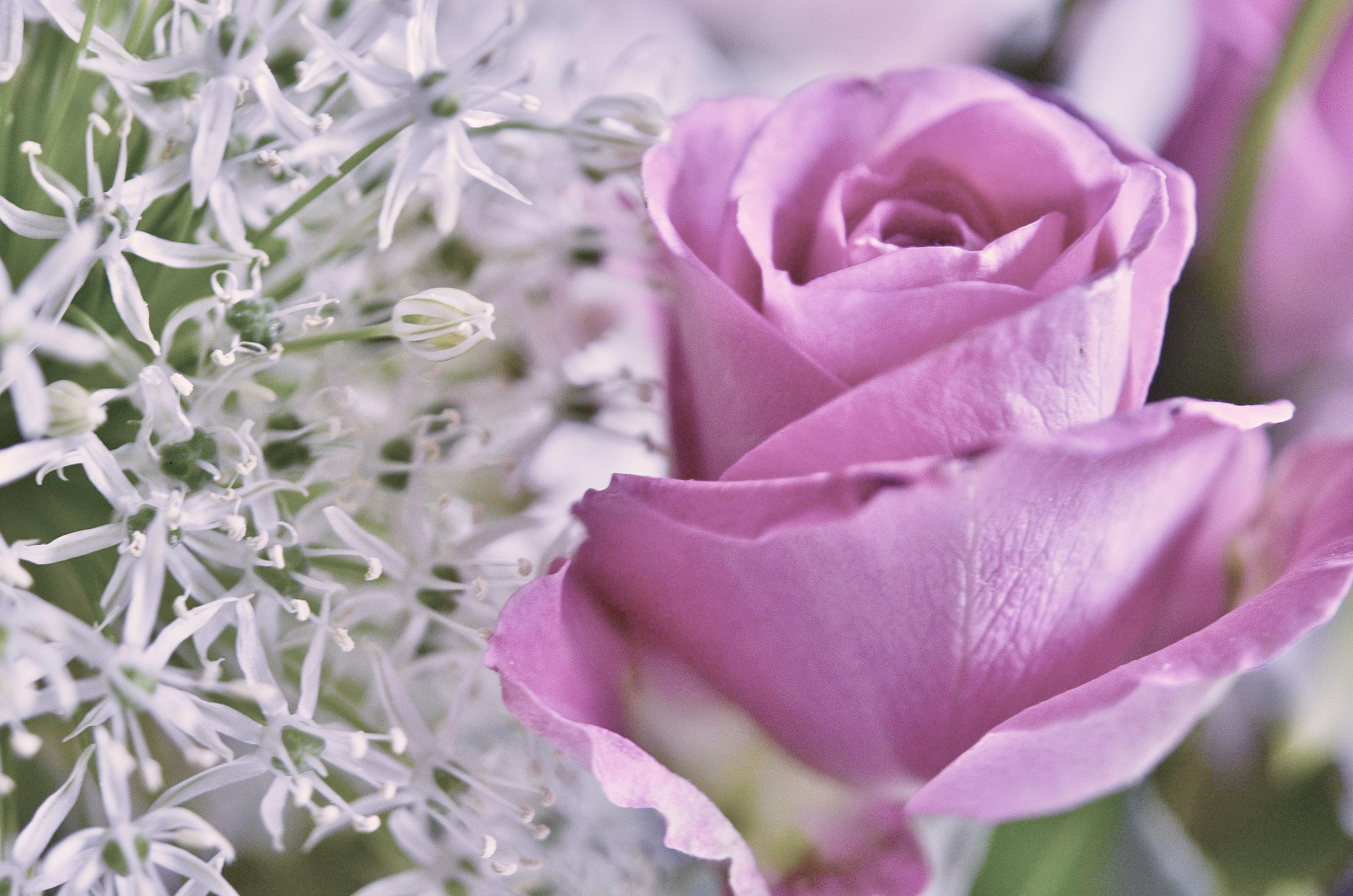 Free Images Nature Blossom Flower Petal Bloom Summer Floral