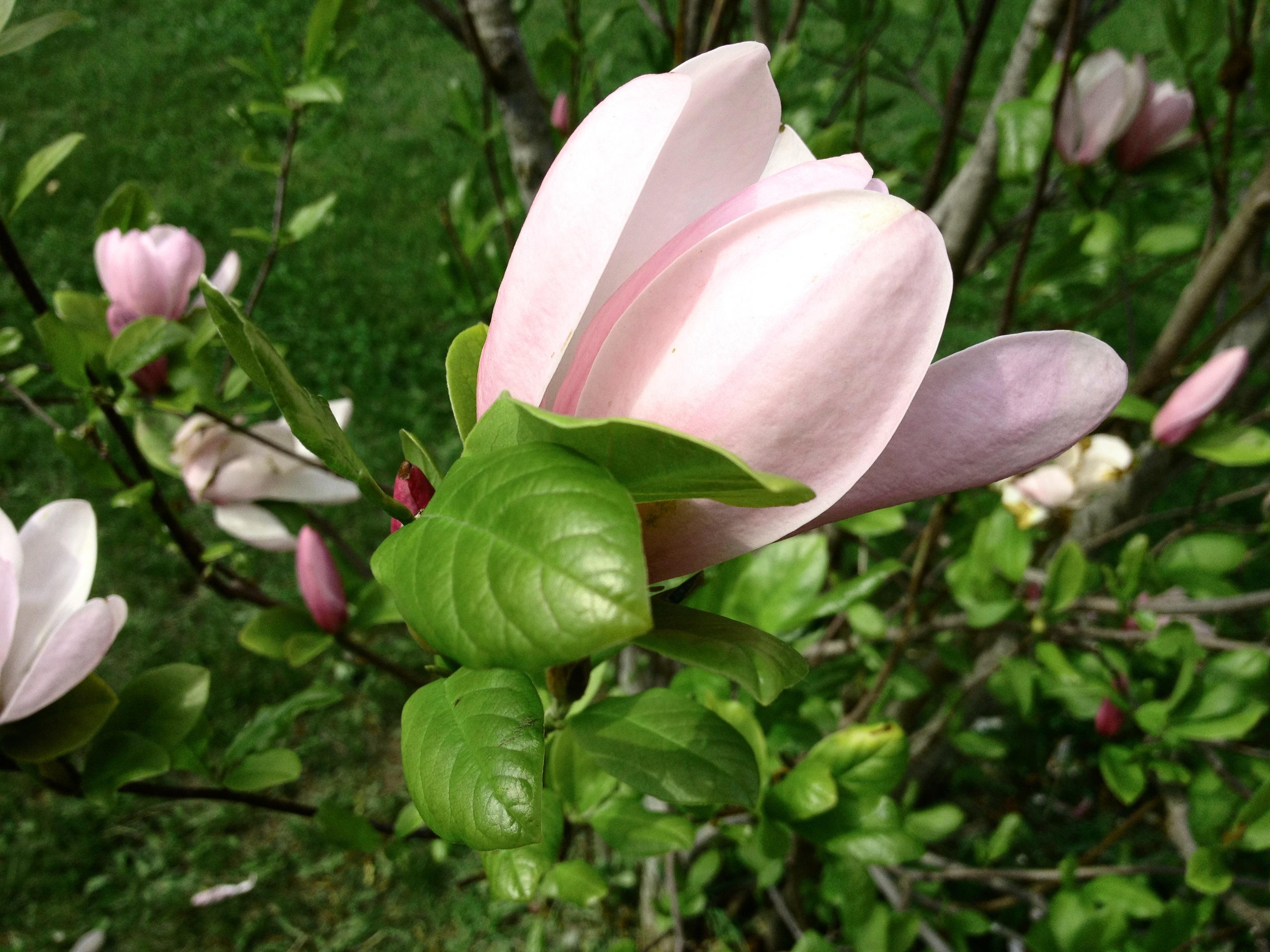 Kostenlose Foto Natur Bluhen Blume Blutenblatt Sommer