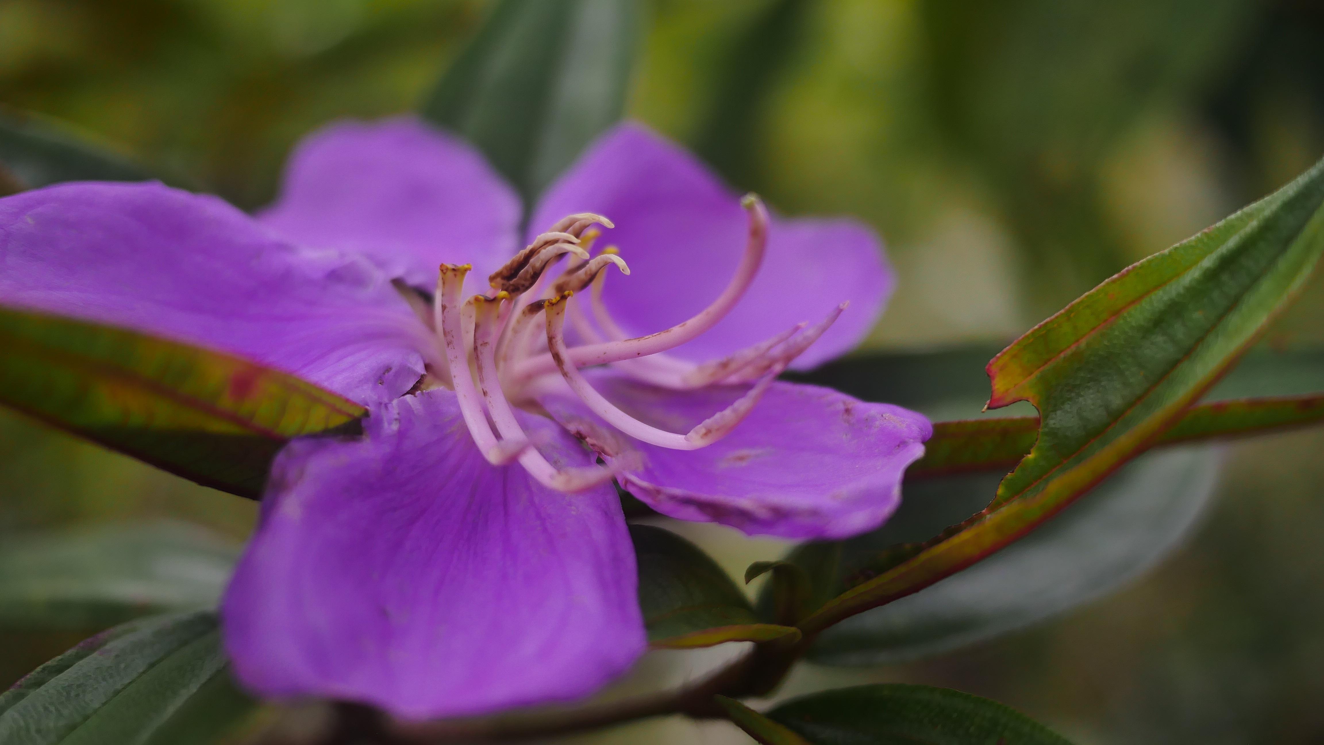 plante exotique fleur mauve