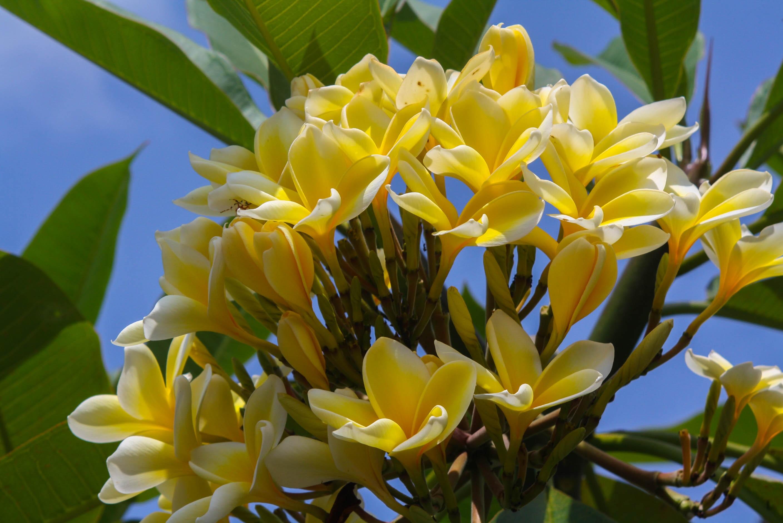 Images Gratuites La Nature Fleur Petale Botanique Flore Fleur
