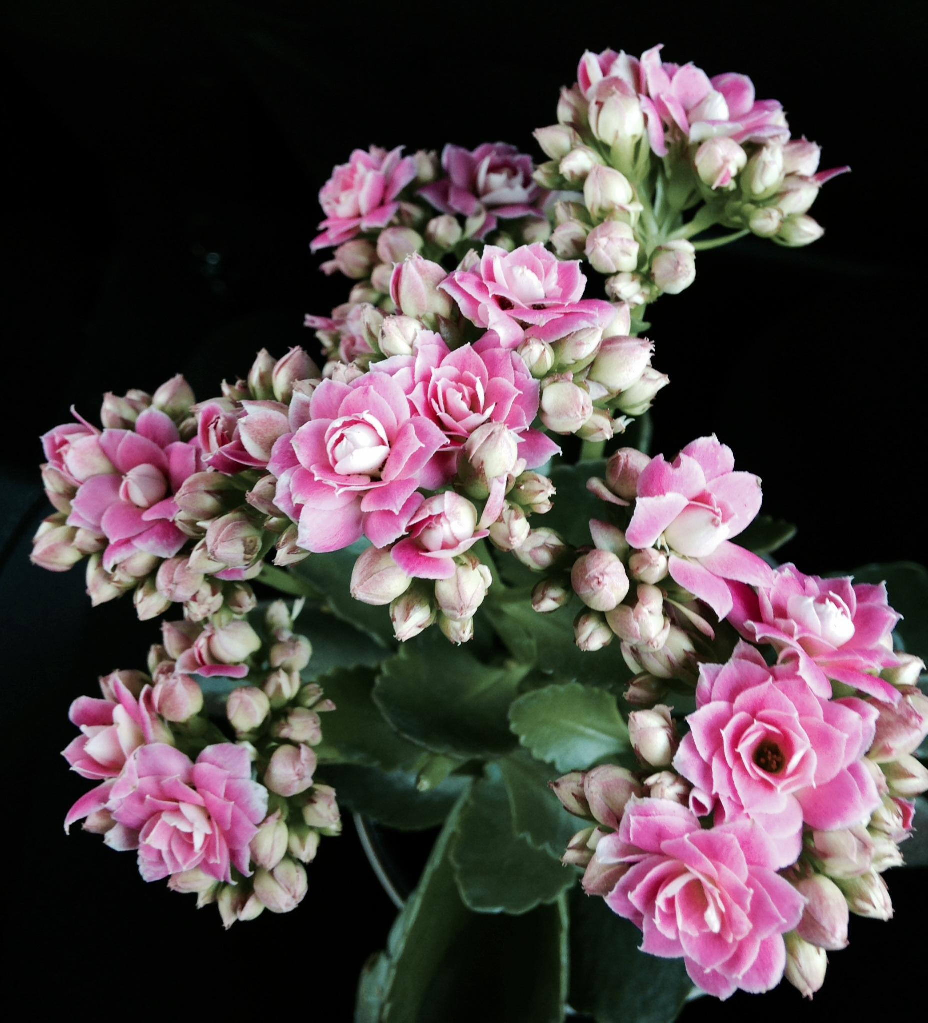 Gambar Alam Mekar Menanam Daun Bunga Musim Semi Warna