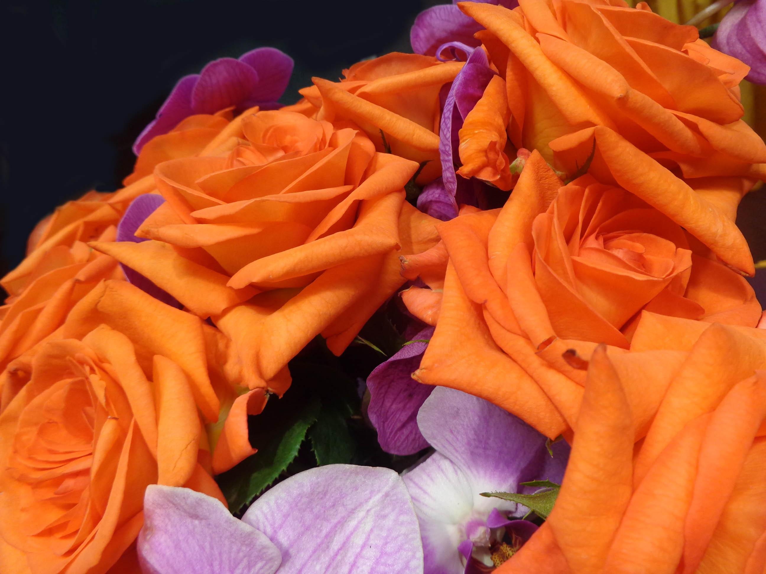 Images Gratuites La Nature Fleur Petale Floral Decoration