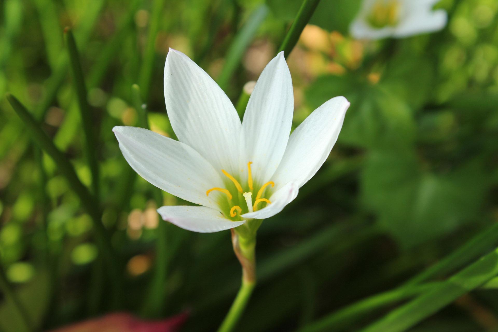 Free Images Nature Blossom Petal Botany Flora White Flower