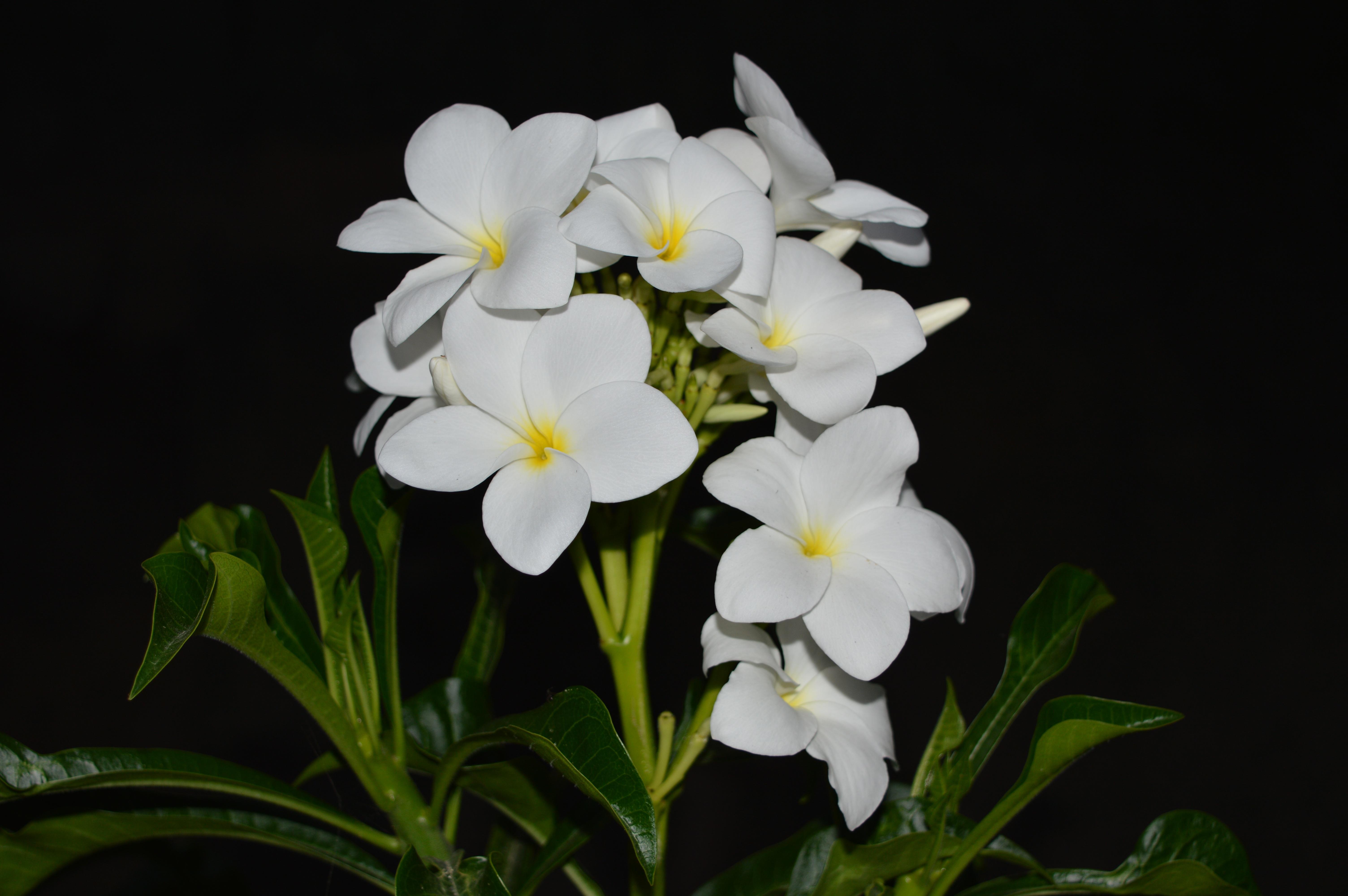 Free Images Nature Blossom Petal Green Botany Garden Flora