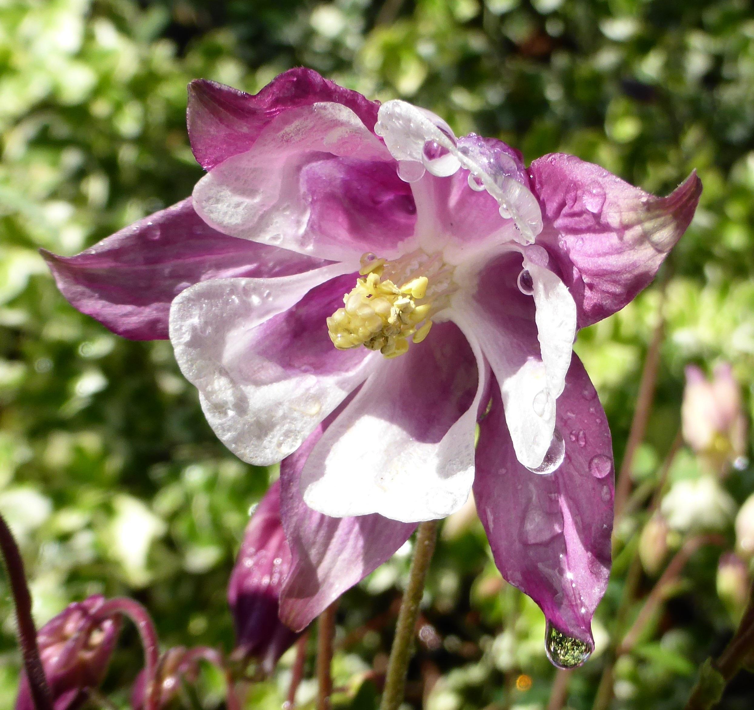Free Images Nature Blossom Flower Petal Spring Botany