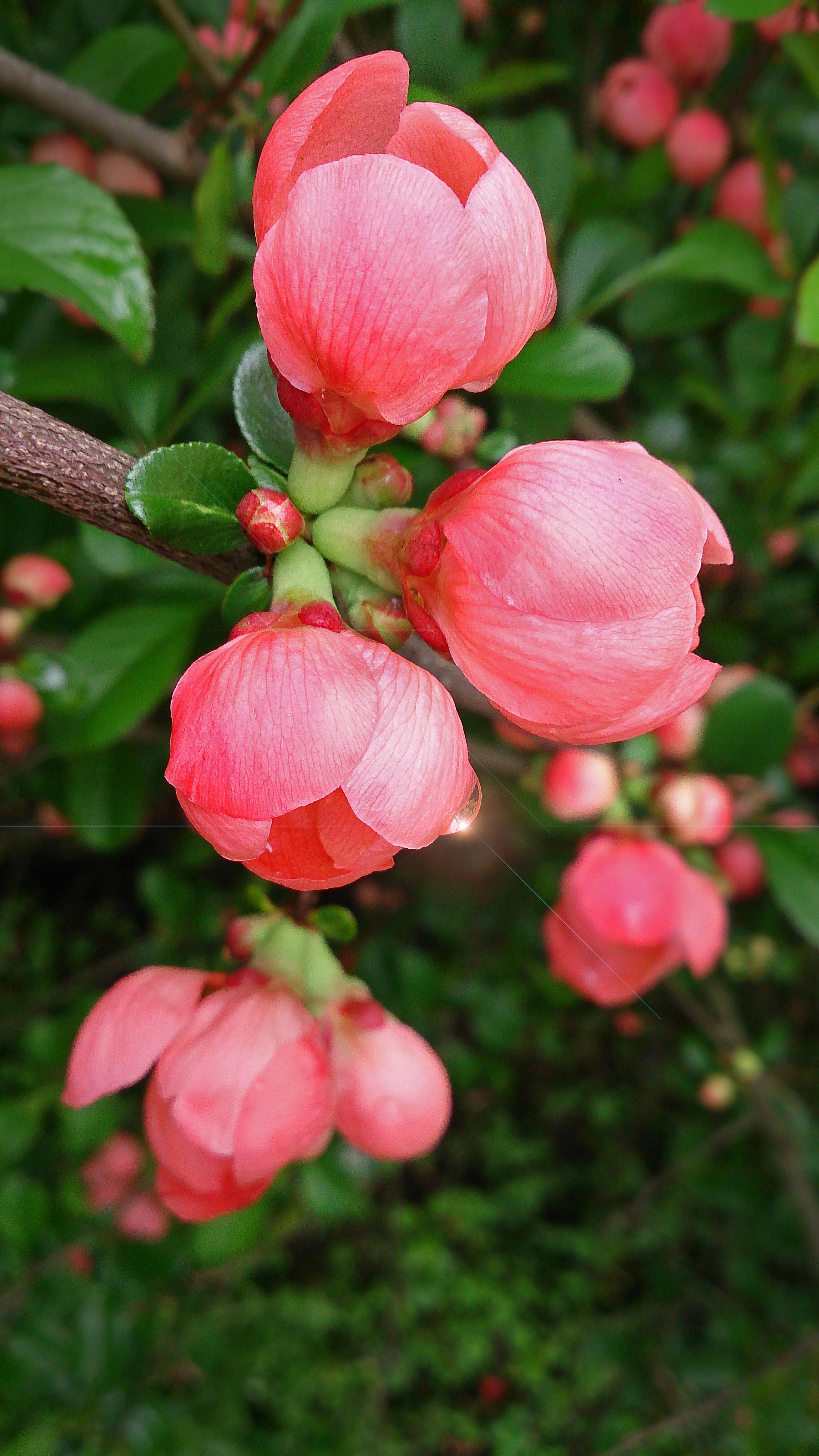 Images Gratuites La Nature Petale Botanique Flore Arbuste
