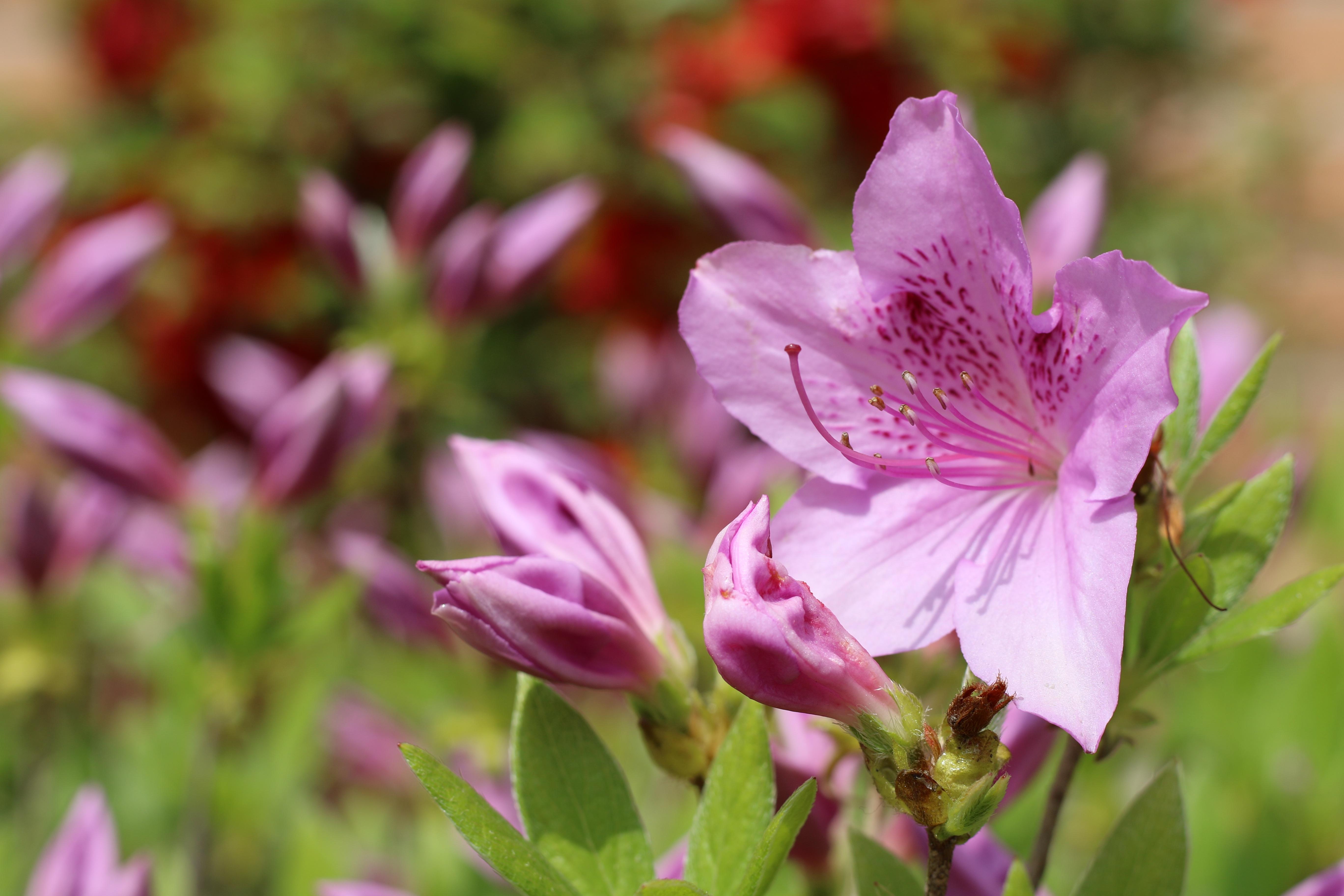 Images Gratuites La Nature Fleur Petale Parc Botanique Rose