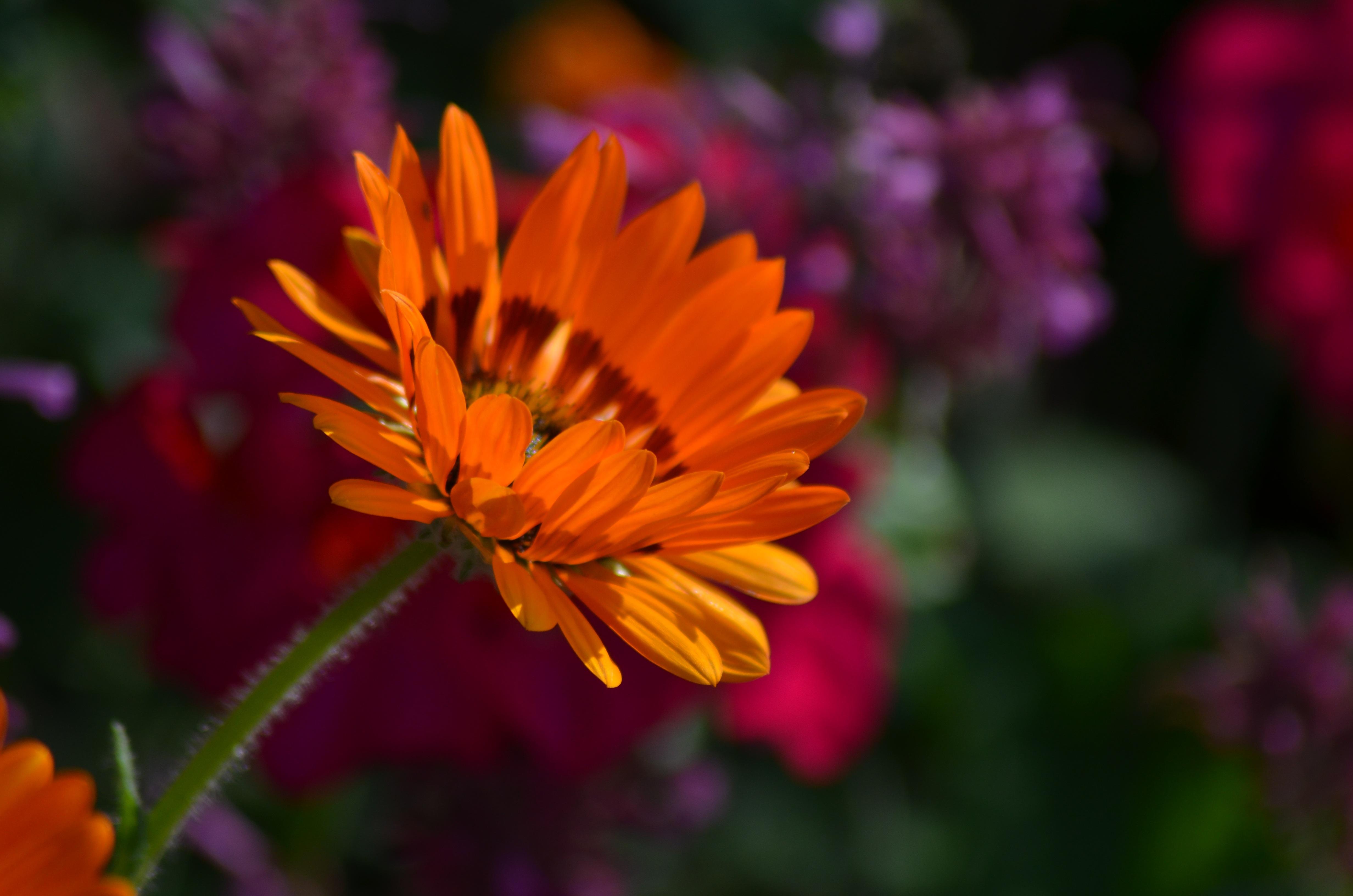 Free Images Nature Flower Petal Pollen Spring Green Botany