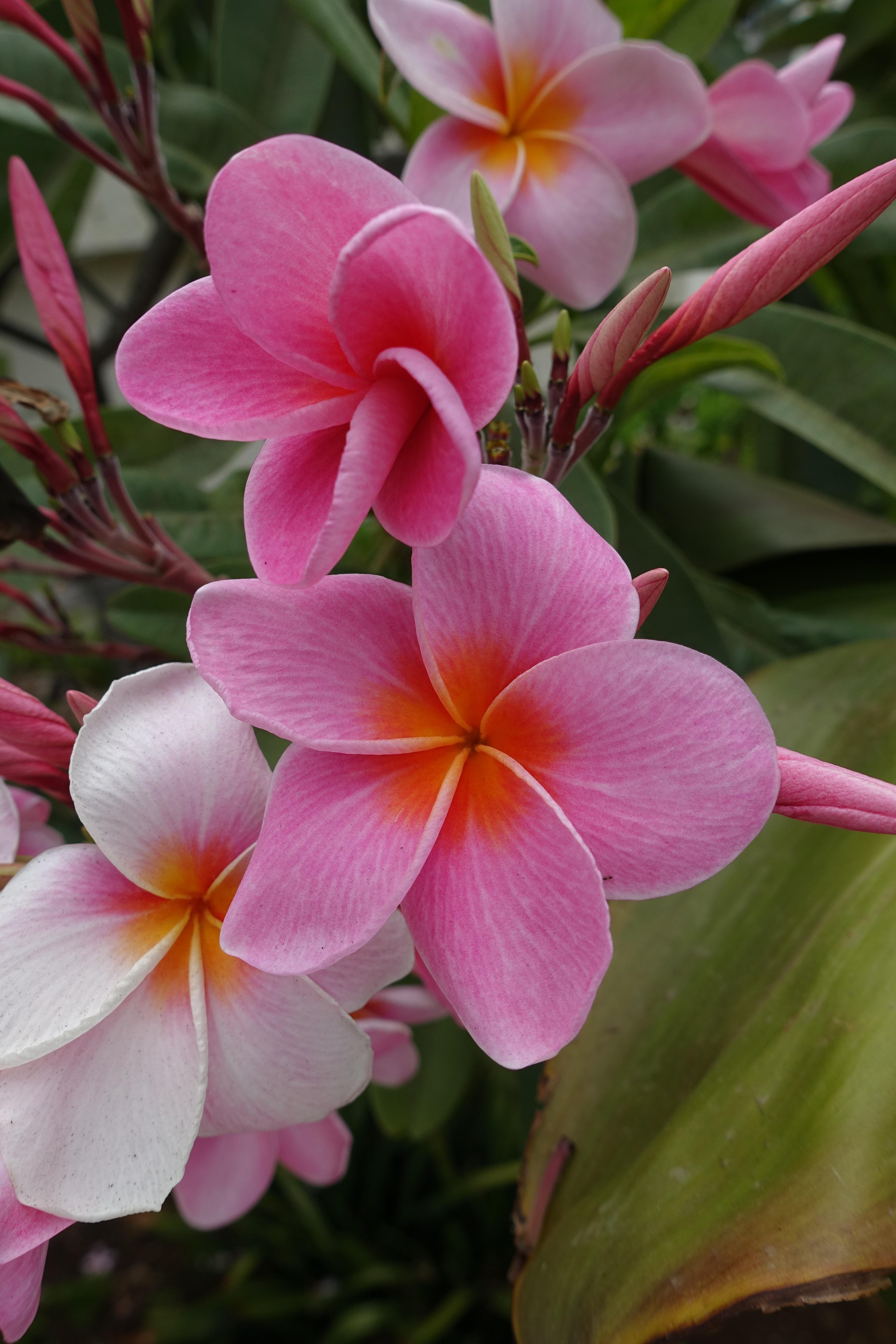 обещал, показать цветочки фото любое знакомство