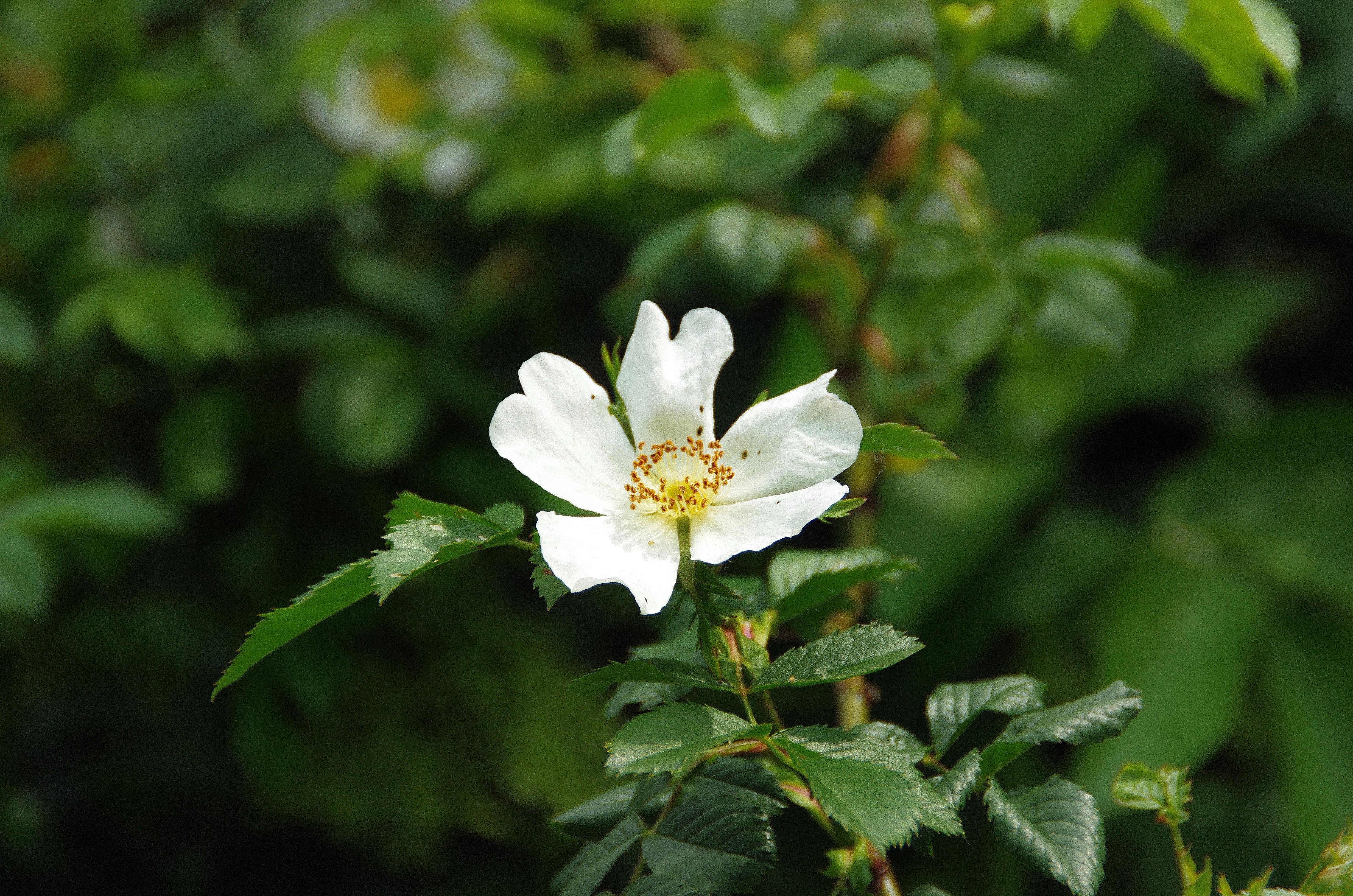 Images Gratuites La Nature Petale Vert Botanique Flore Fleur