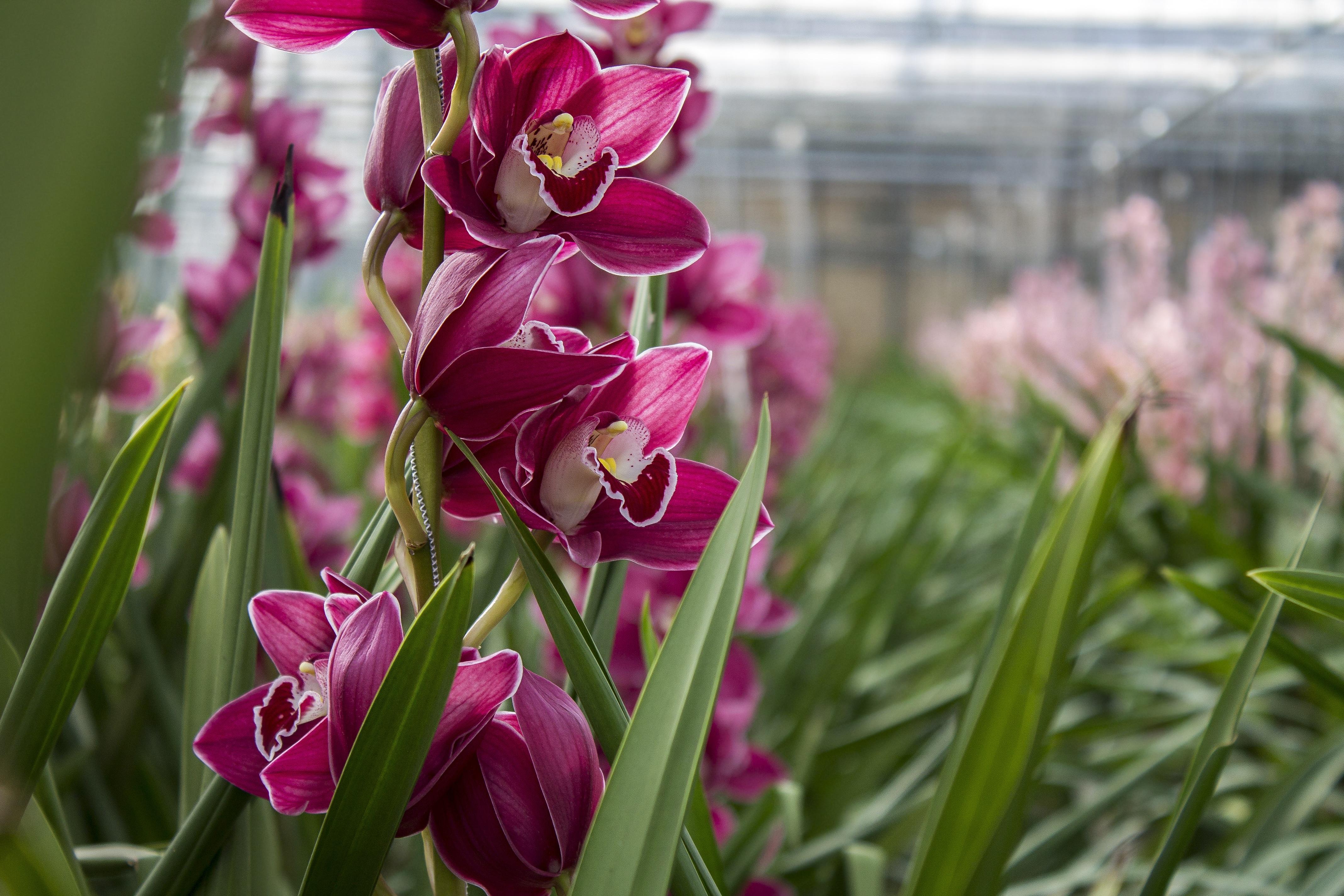 kostenlose foto natur bl hen blume lila gr n botanik bunt garten rosa flora. Black Bedroom Furniture Sets. Home Design Ideas