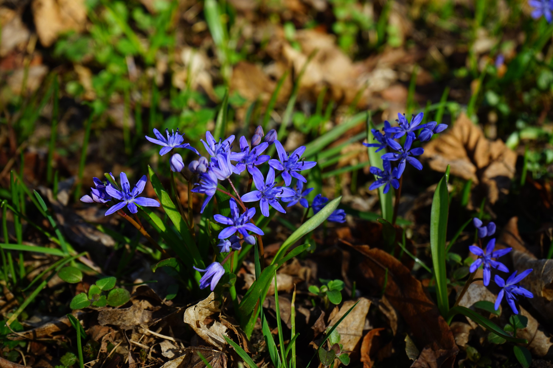Images gratuites la nature fleur violet herbe botanique bleu jardin flore fleur - Image fleur violette gratuite ...