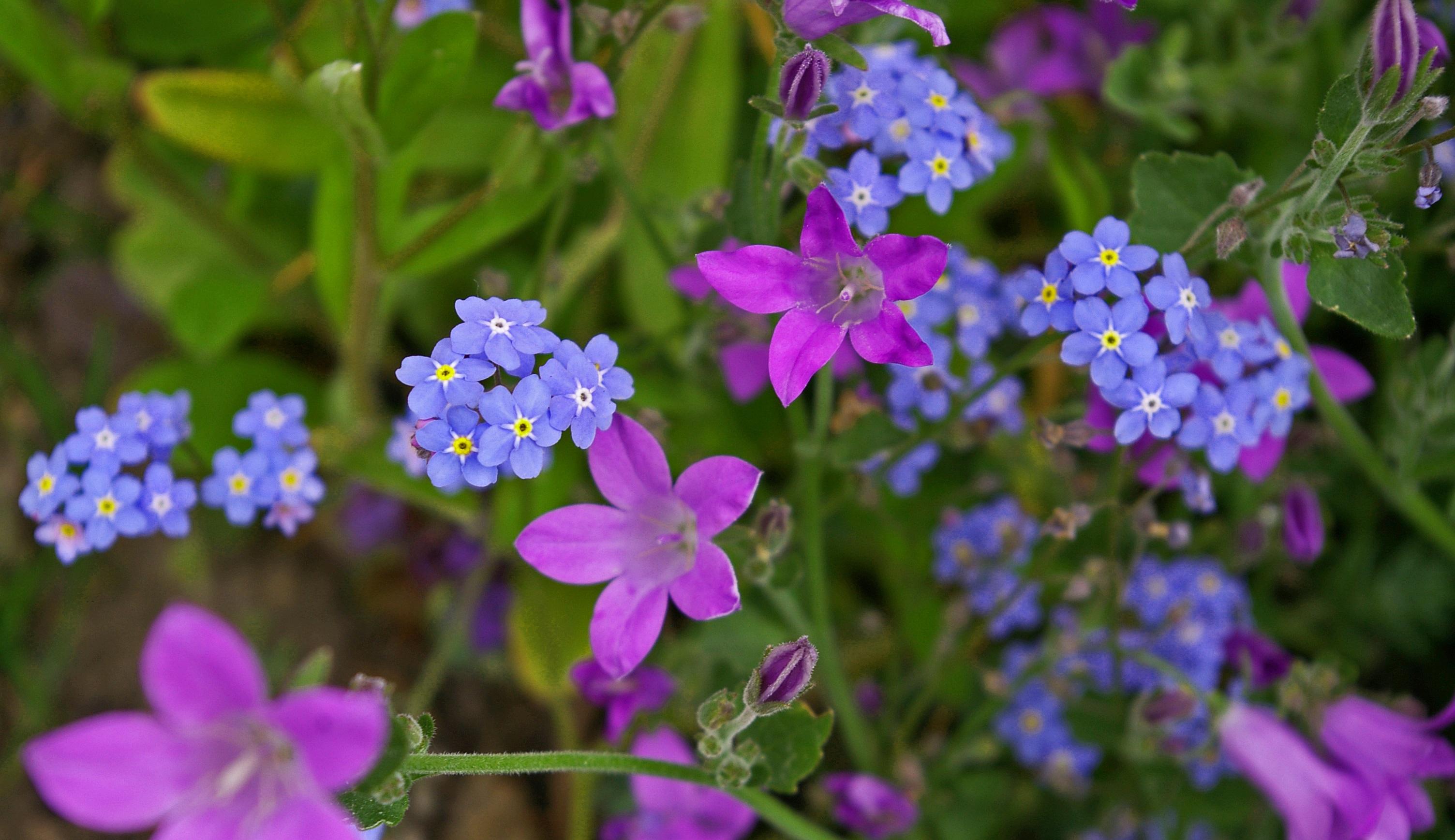 Free Images Nature Blossom Bloom Summer Herb Botany Flora