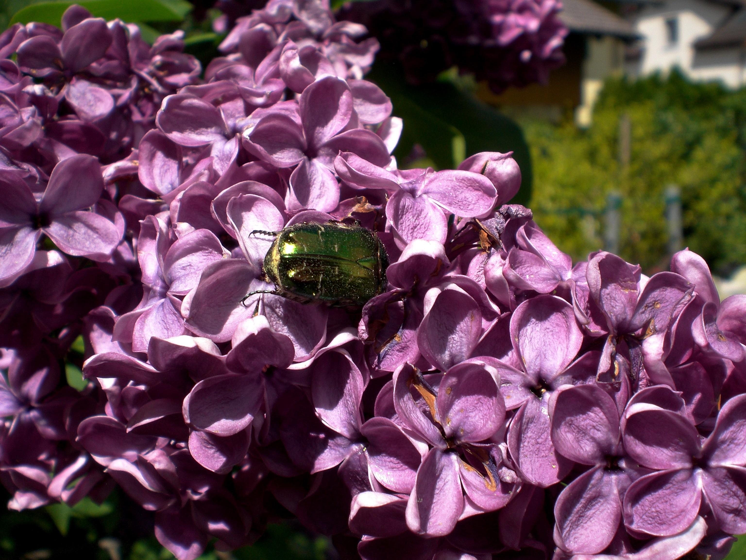 images gratuites : la nature, fleur, violet, pétale, animal, vert