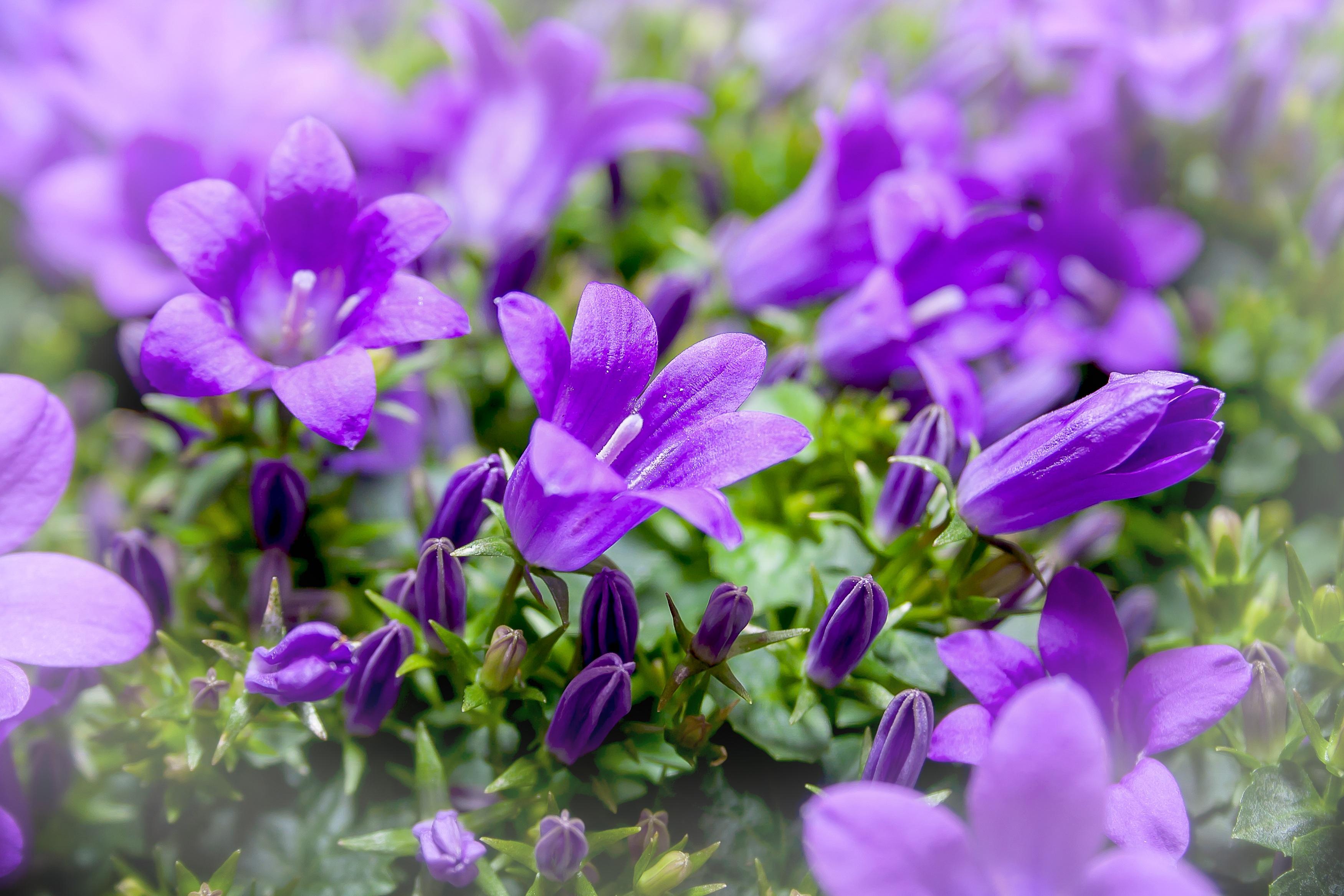 Цветок декоративный колокольчик
