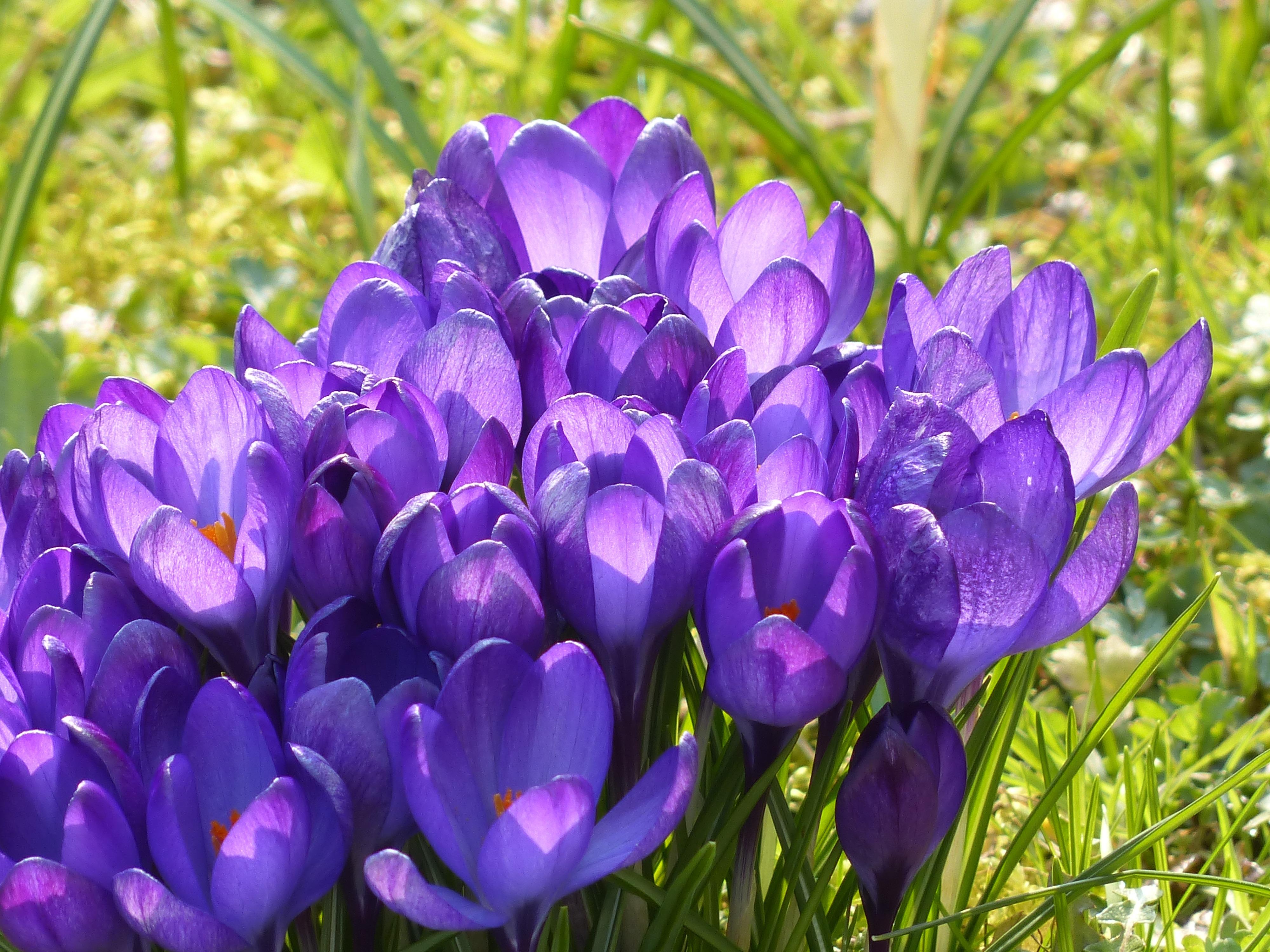 Free Images Nature Blossom Flower Purple Petal Bloom Botany