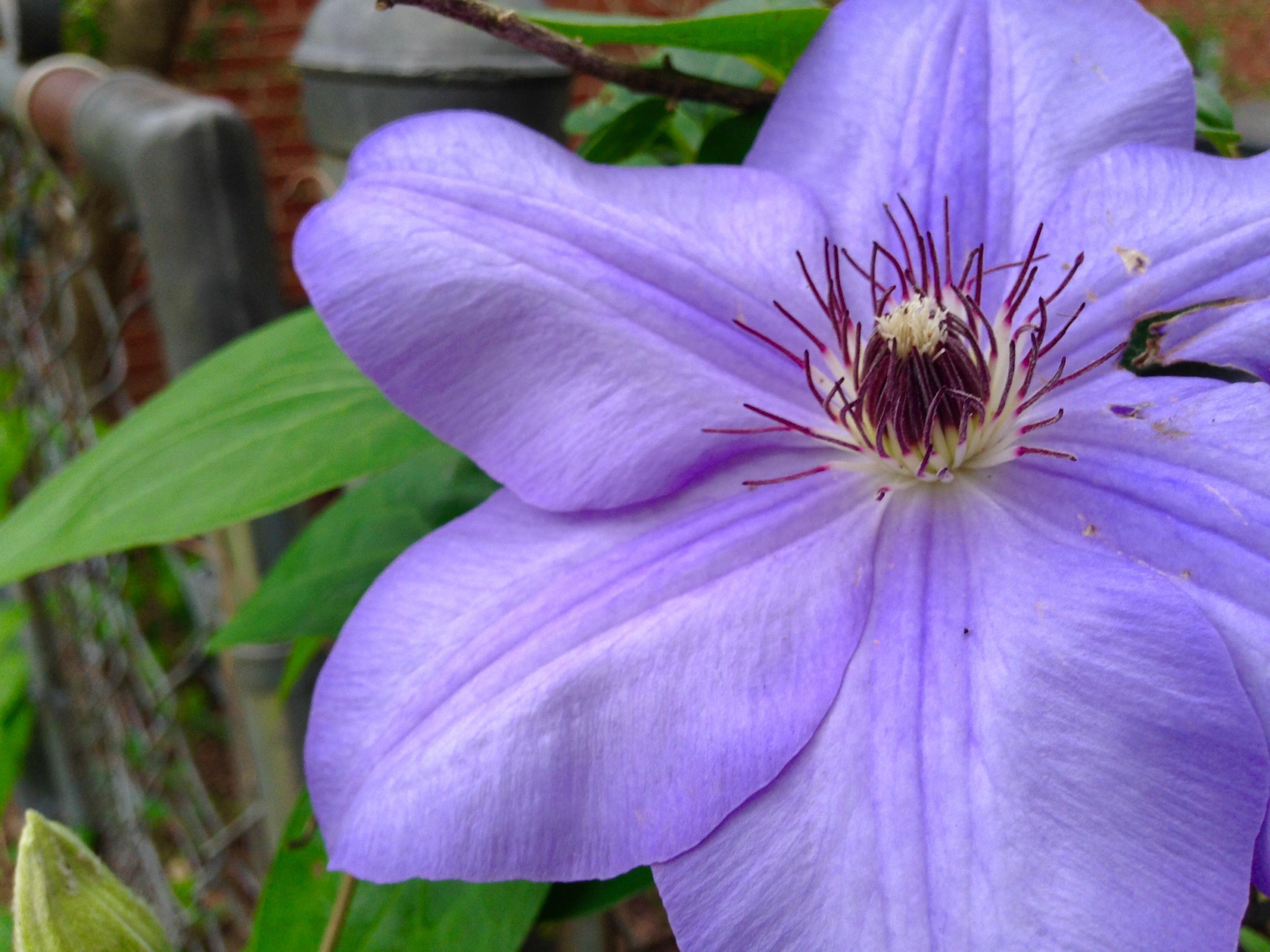 images gratuites la nature fleur violet p tale floraison printemps botanique flore. Black Bedroom Furniture Sets. Home Design Ideas