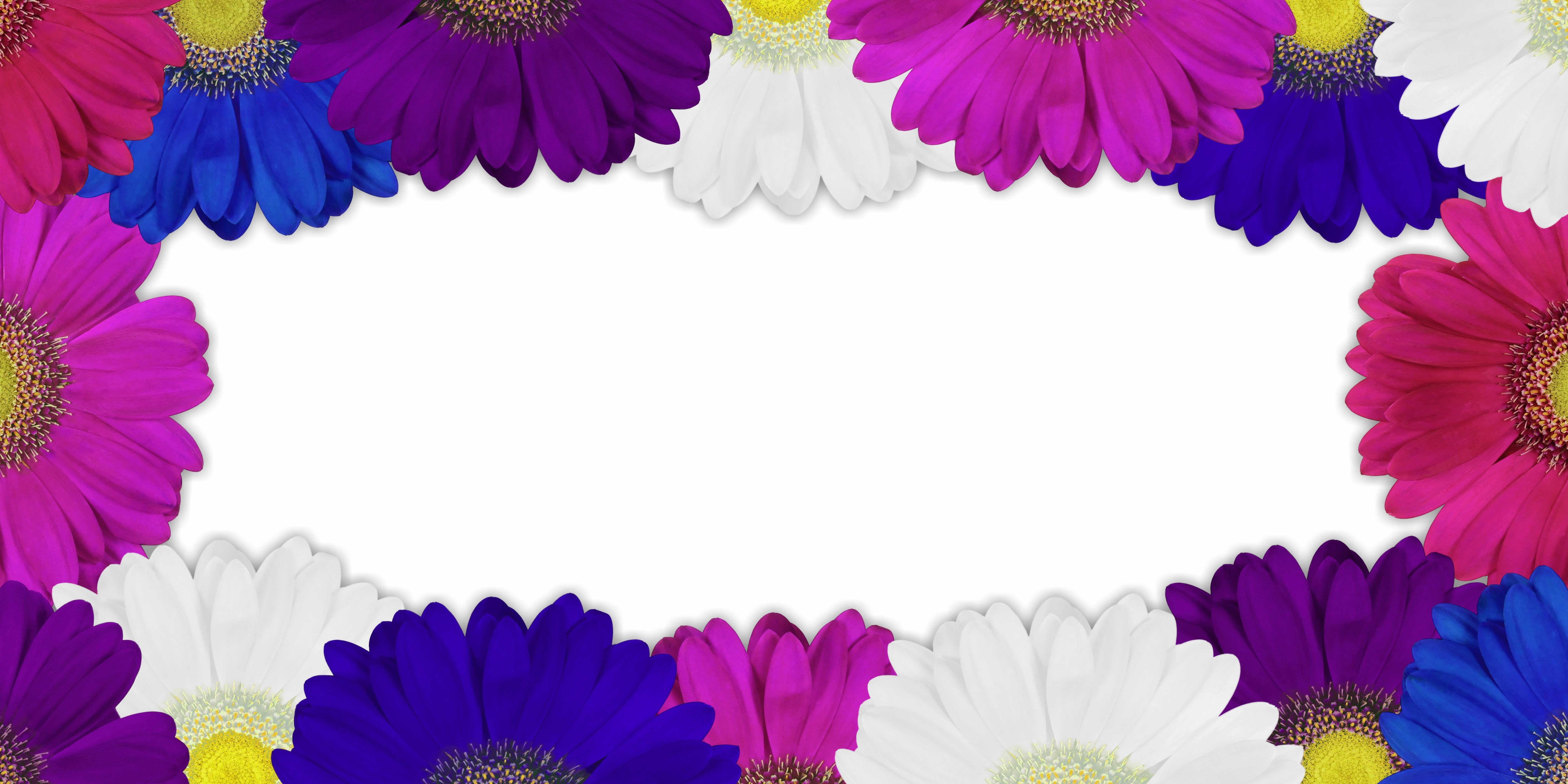 Free nature blossom plant flower purple petal bloom