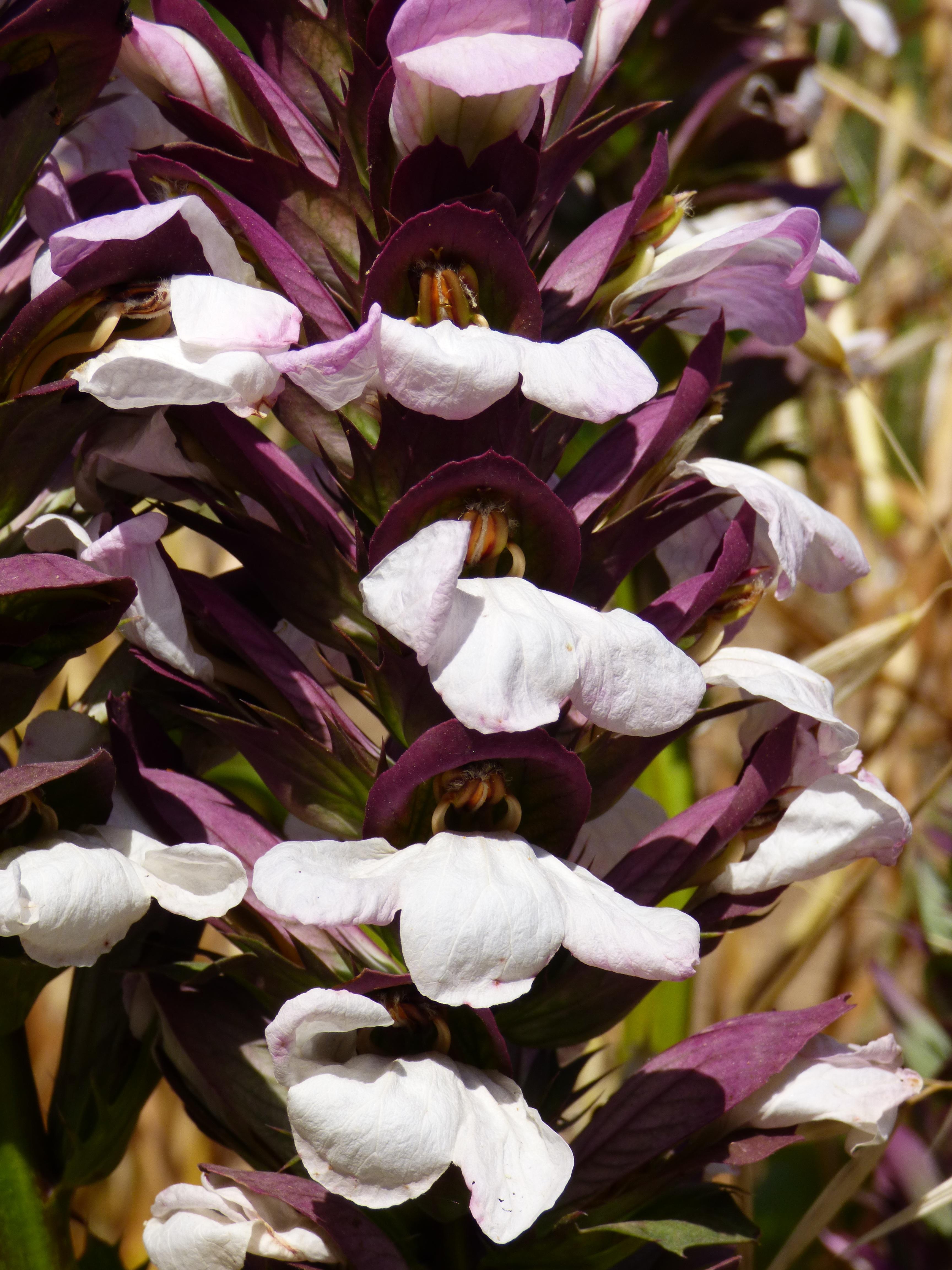 Images Gratuites : la nature, fleur, violet, pétale, Floraison, printemps, Naturel, botanique ...
