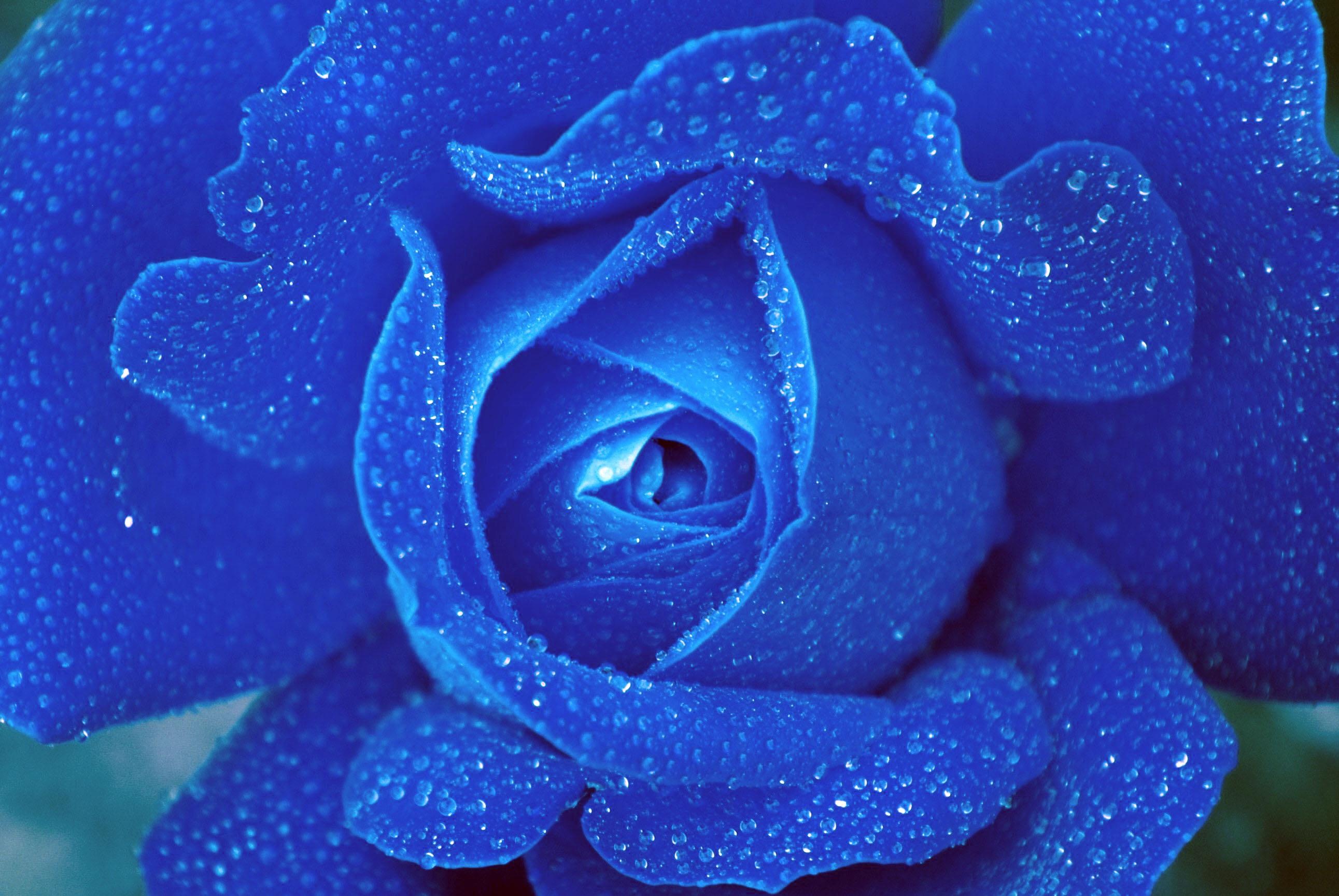 голубые картинки на мой мир дополнительно одела