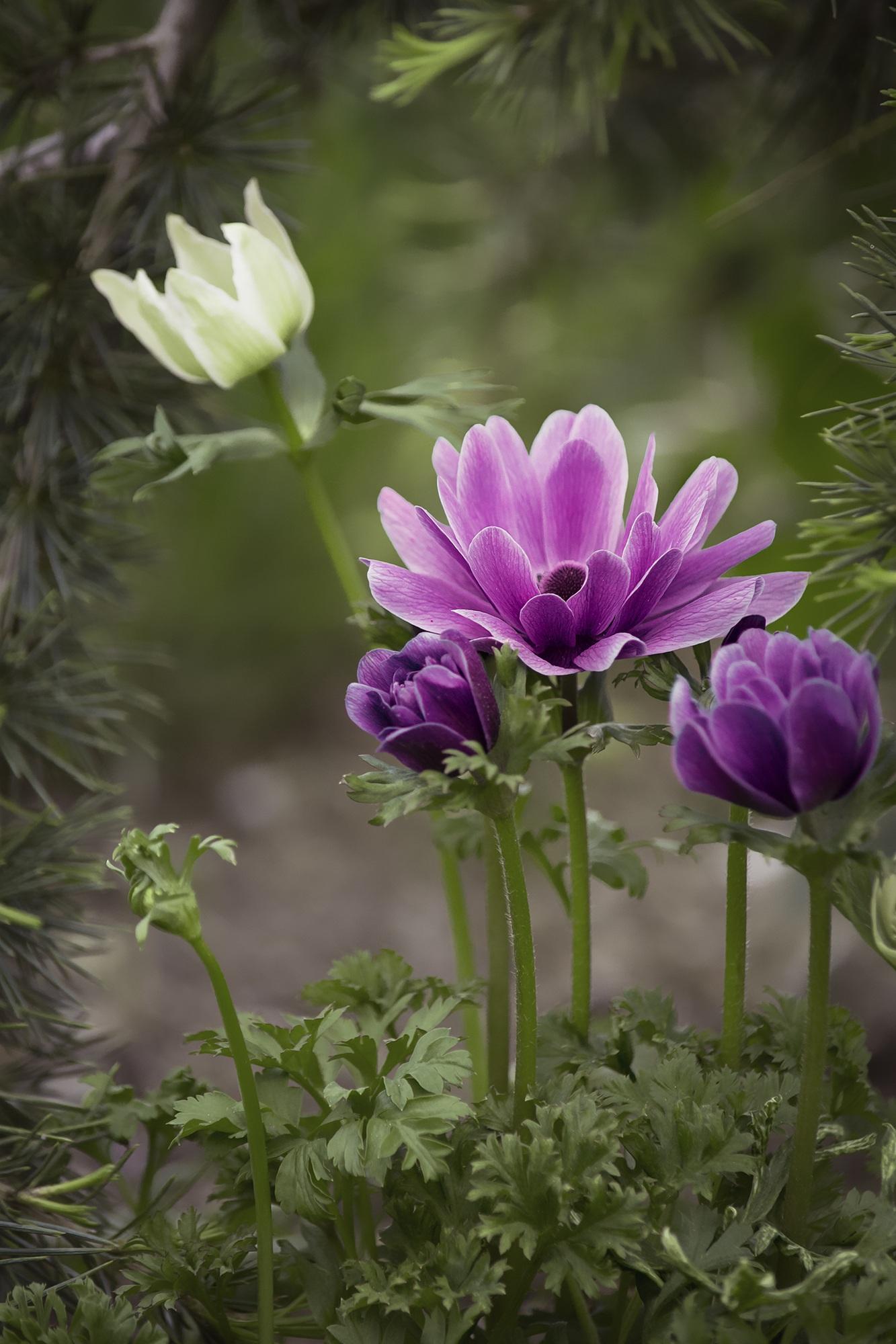 Free Images Nature Blossom Petal Bloom Summer Spring Botany