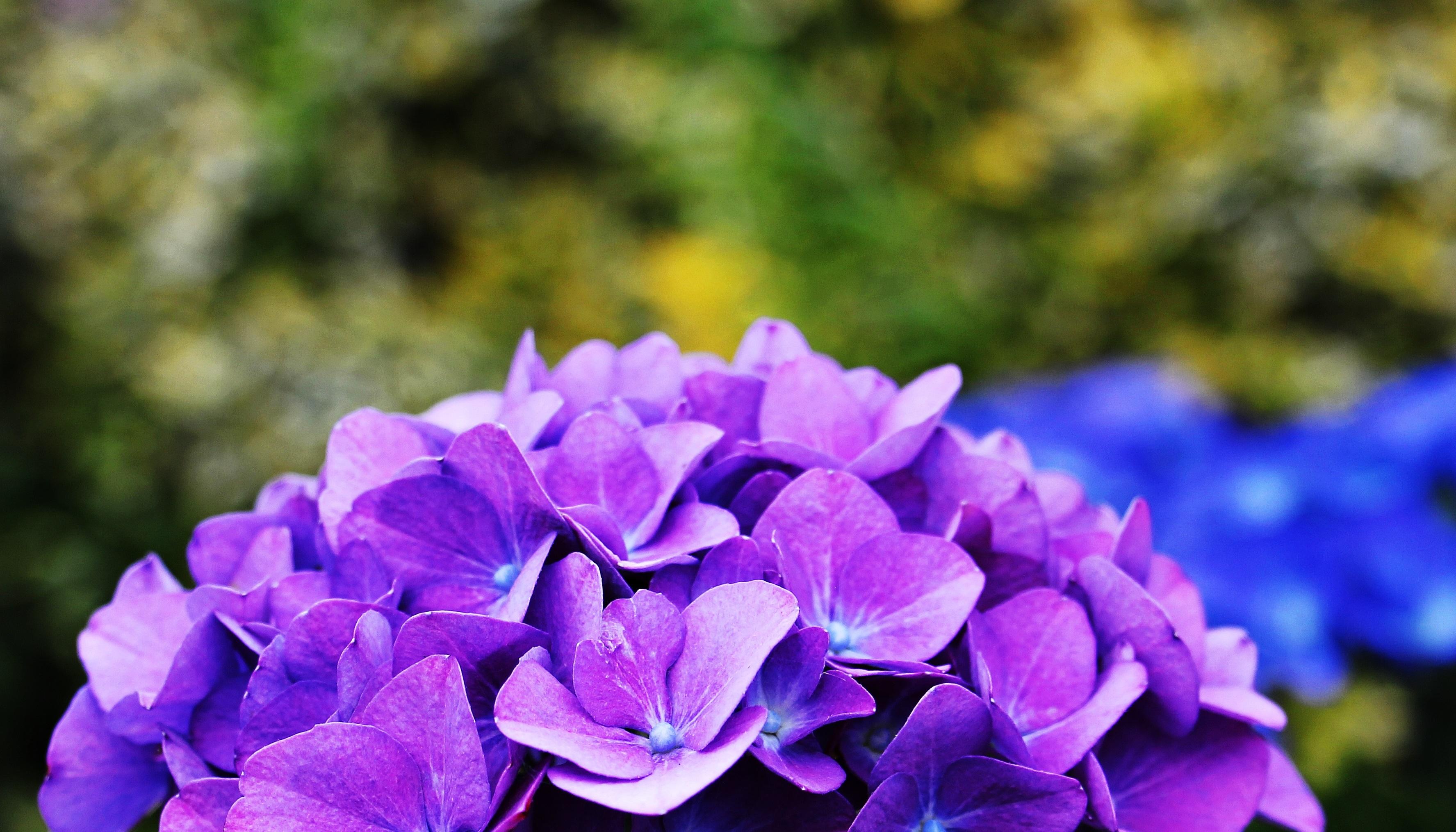 картинки с цветами фиолетово-синего молоды