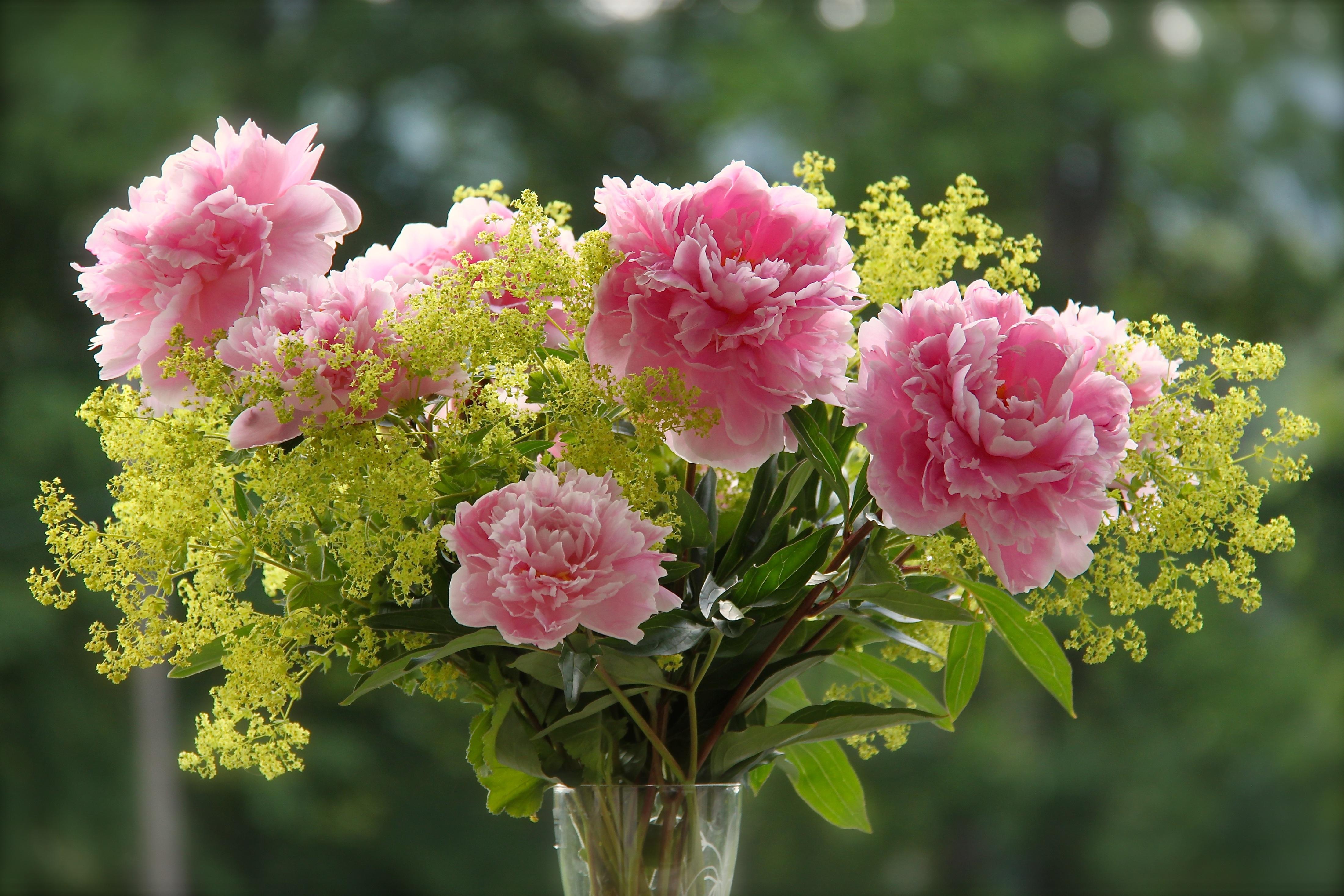 фото красивых цветов живых в природе это, пользоваться