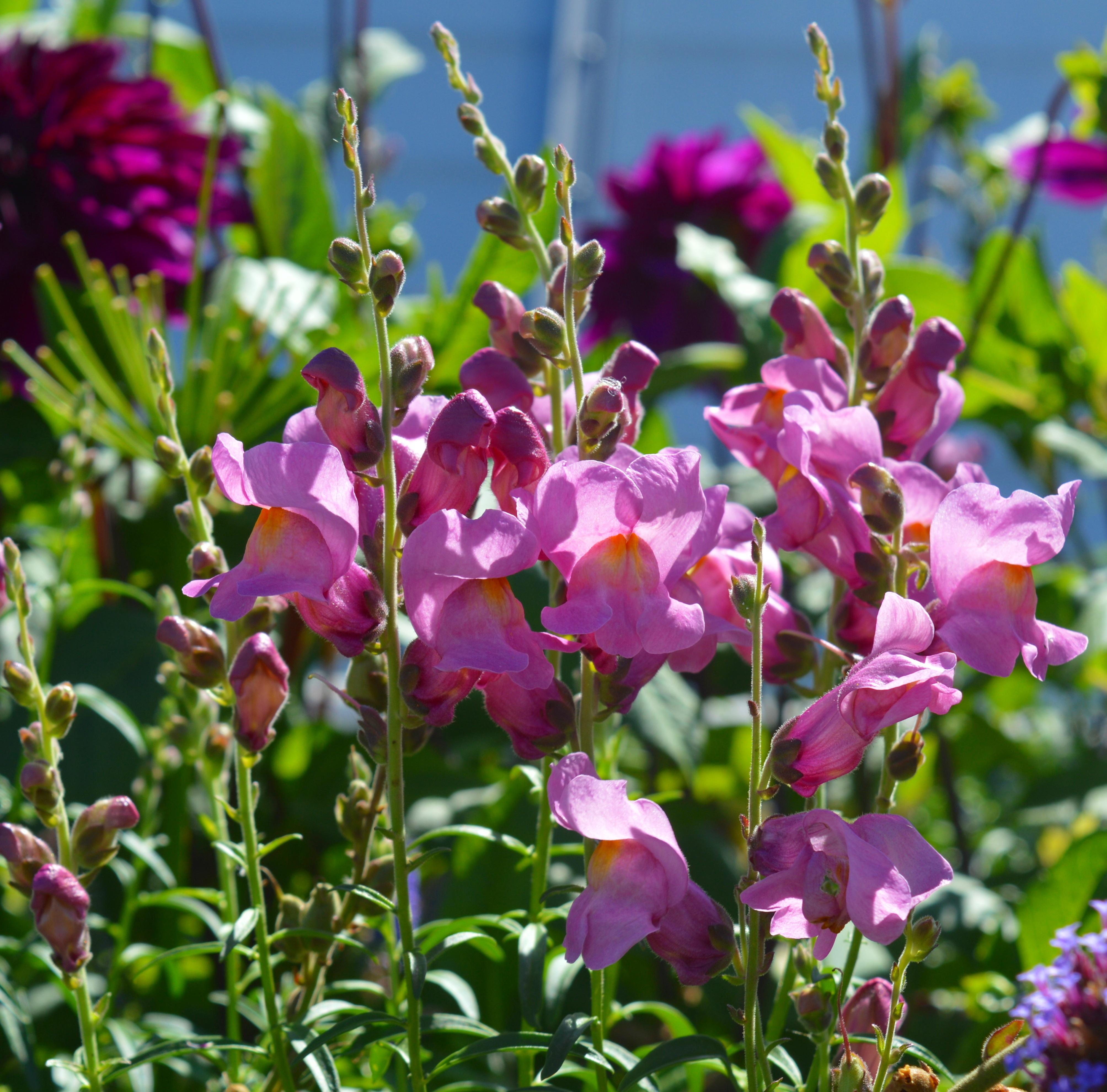 Images Gratuites La Nature Fleur Ete Herbe Botanique Jardin