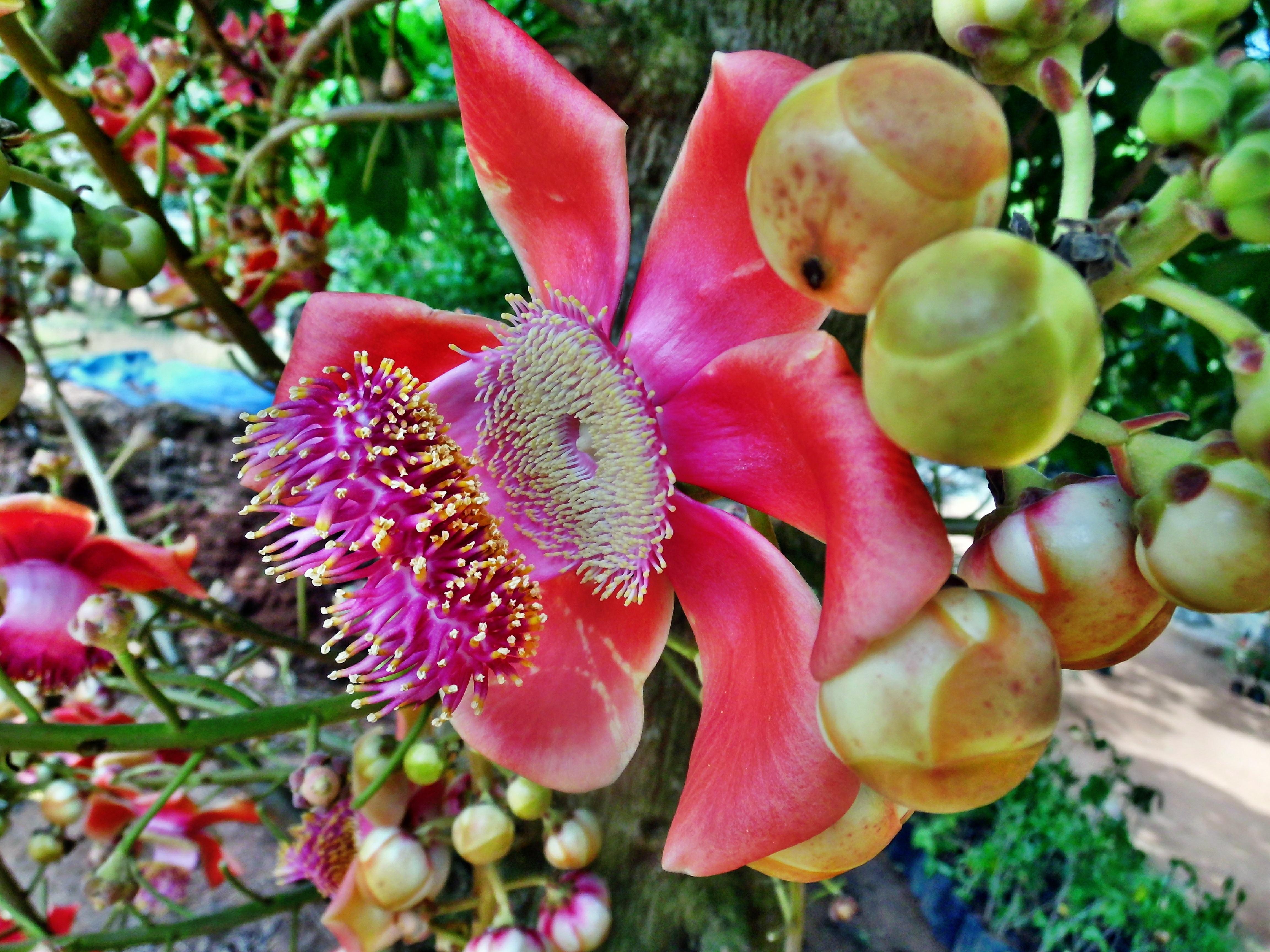 плохо очень редкие тропические ягоды фото теперь легче