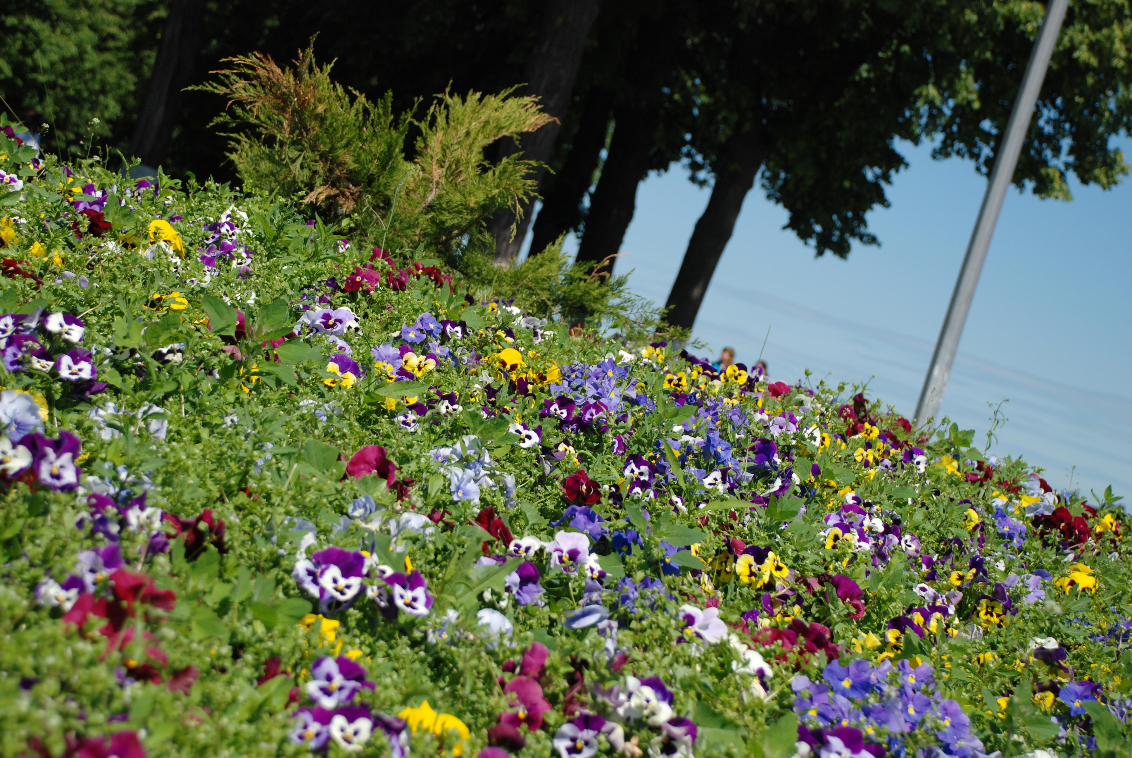 Картинка лужайка цветов