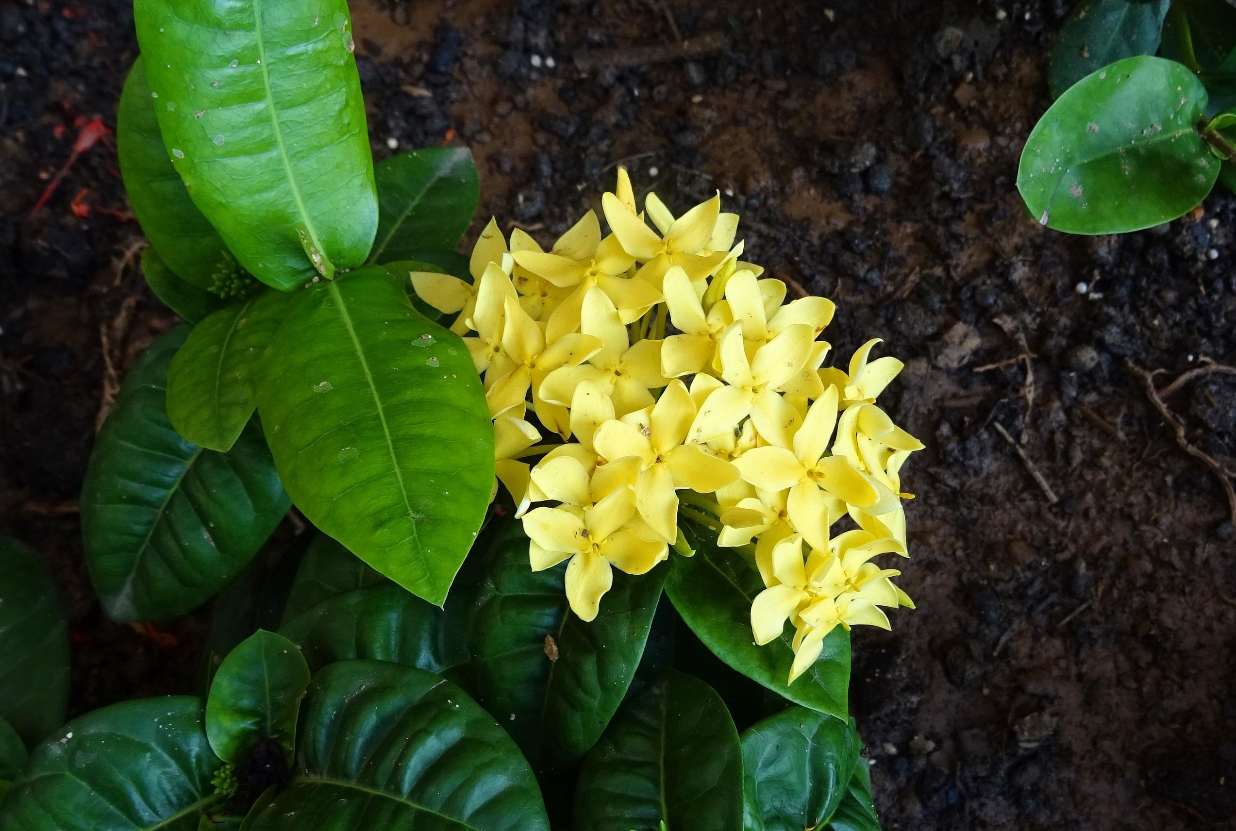 images gratuites : la nature, fleur, feuille, floraison, floral