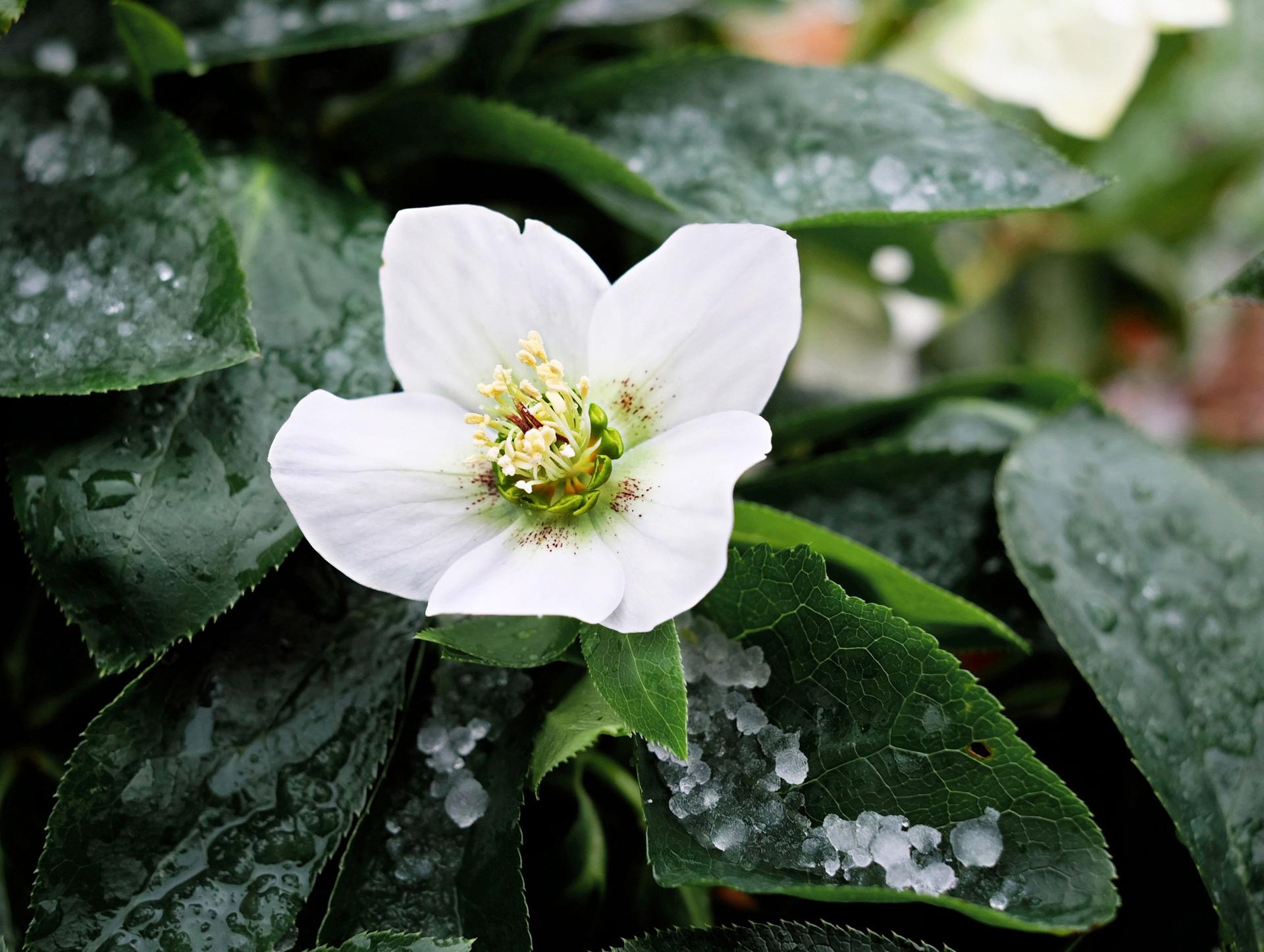 Kostenlose foto : Natur, blühen, Blatt, Blume, Blütenblatt, Grün ...