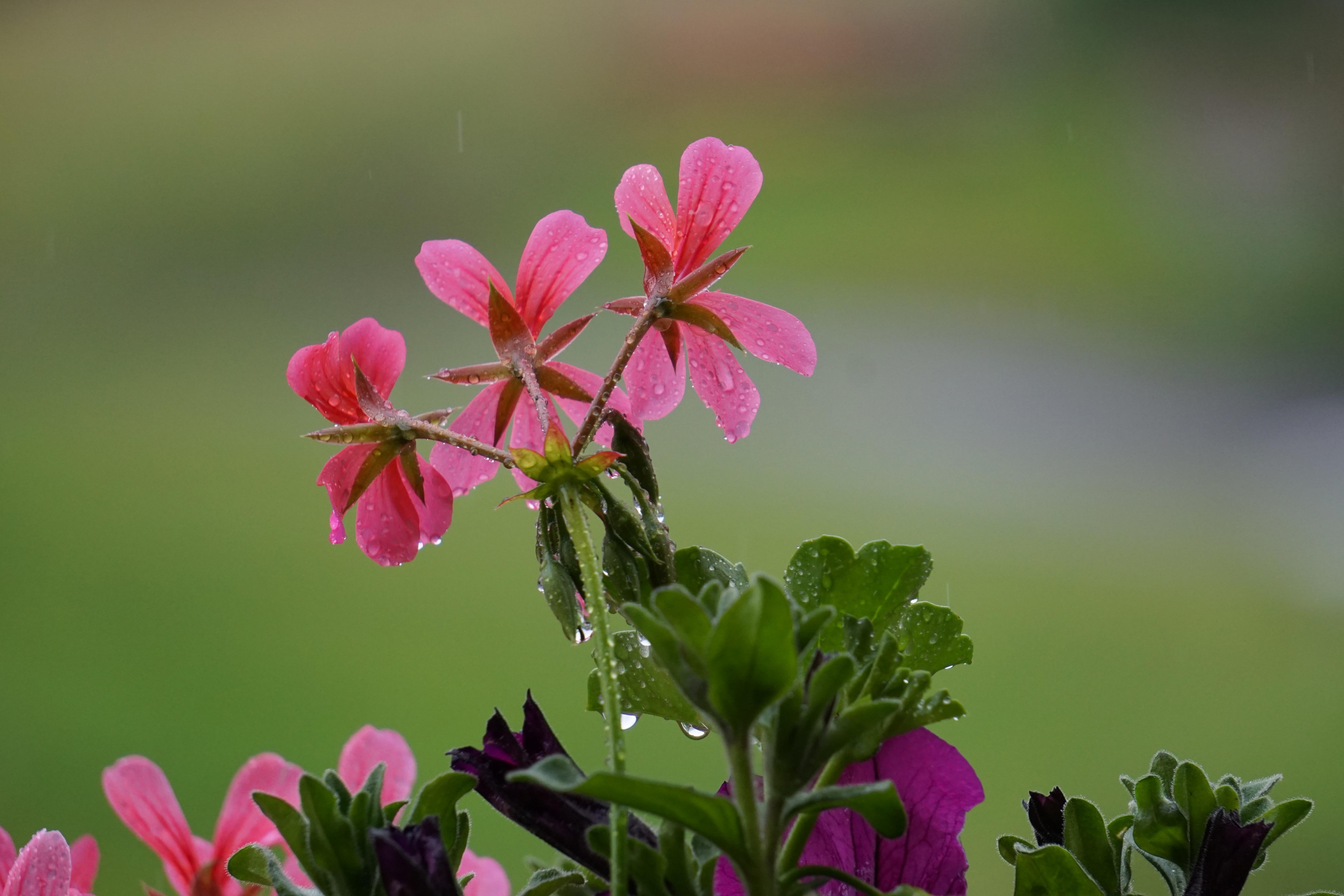 Images Gratuites La Nature Feuille Petale Floraison Vert