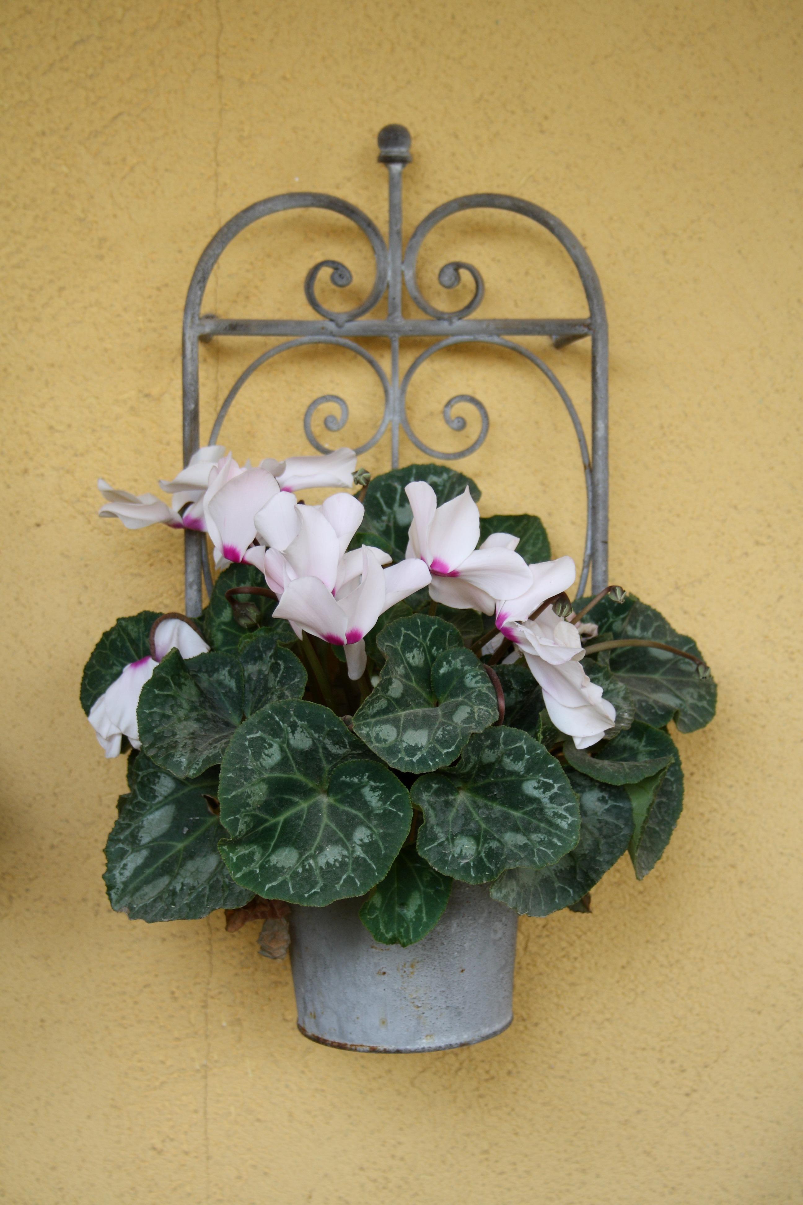 free images : nature, blossom, leaf, petal, bloom, green, red
