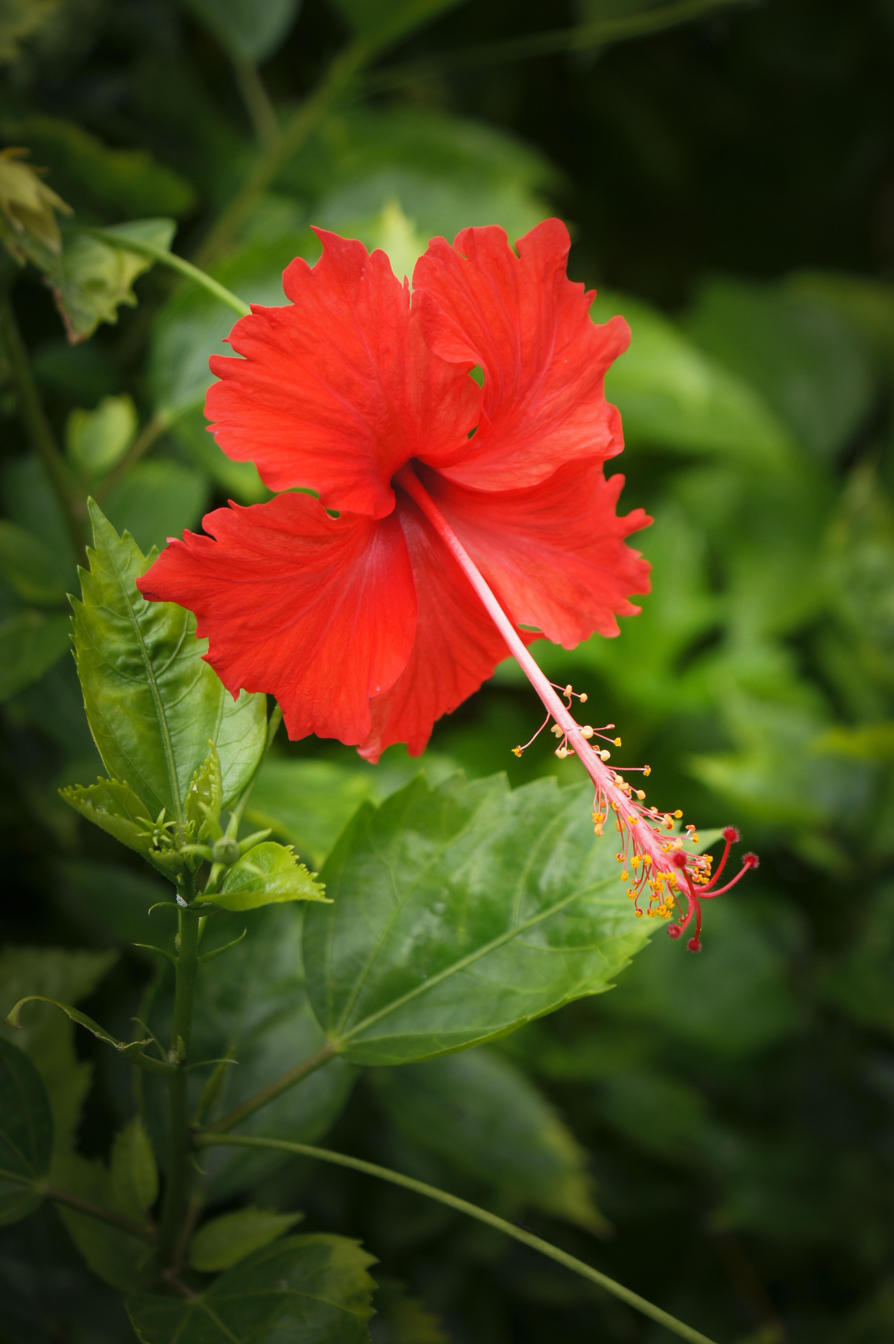 Free Images : nature, blossom, leaf, flower, petal, bloom, green ...