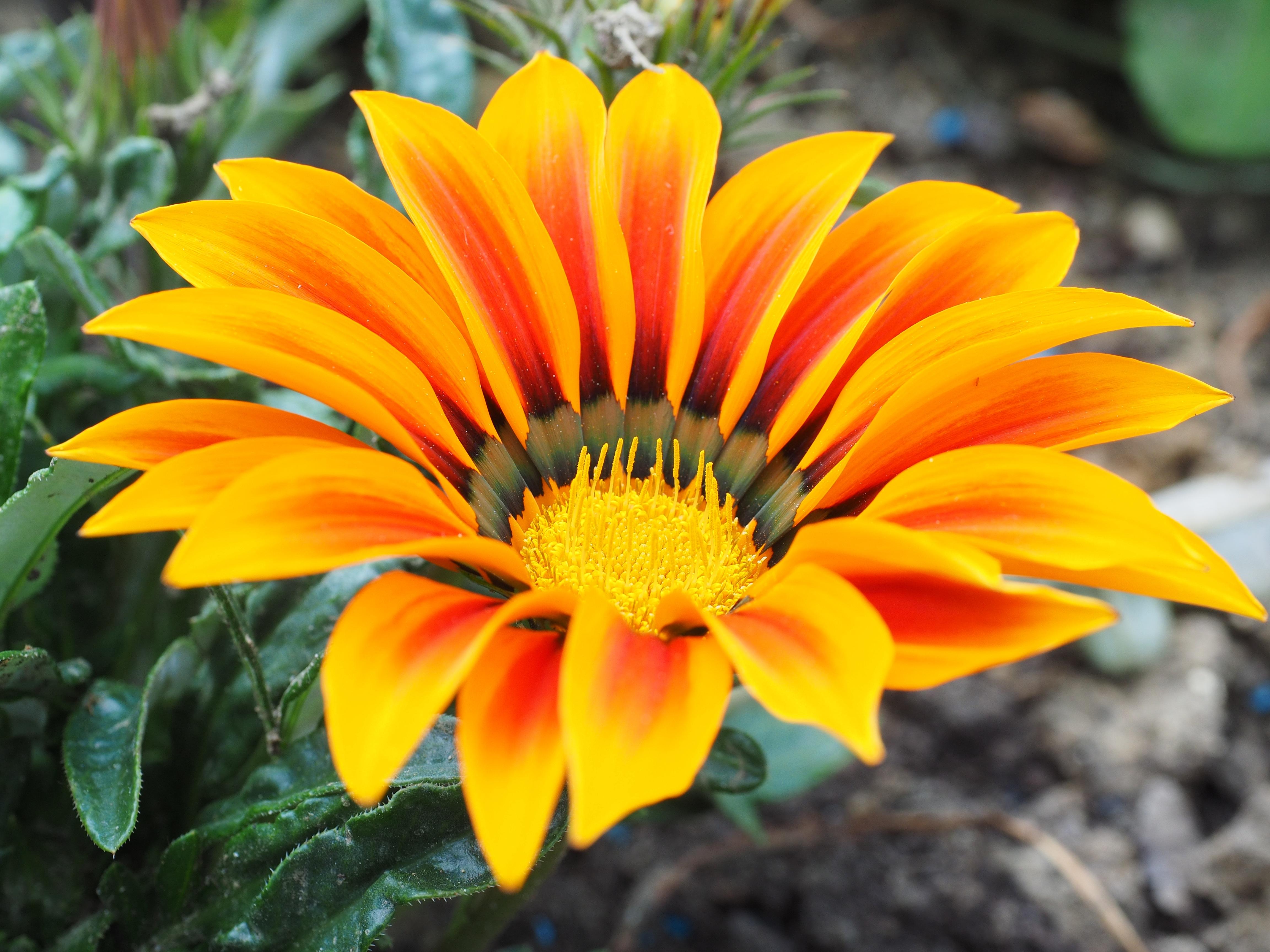 Immagini belle natura fiorire foglia petalo for Fiori ornamentali